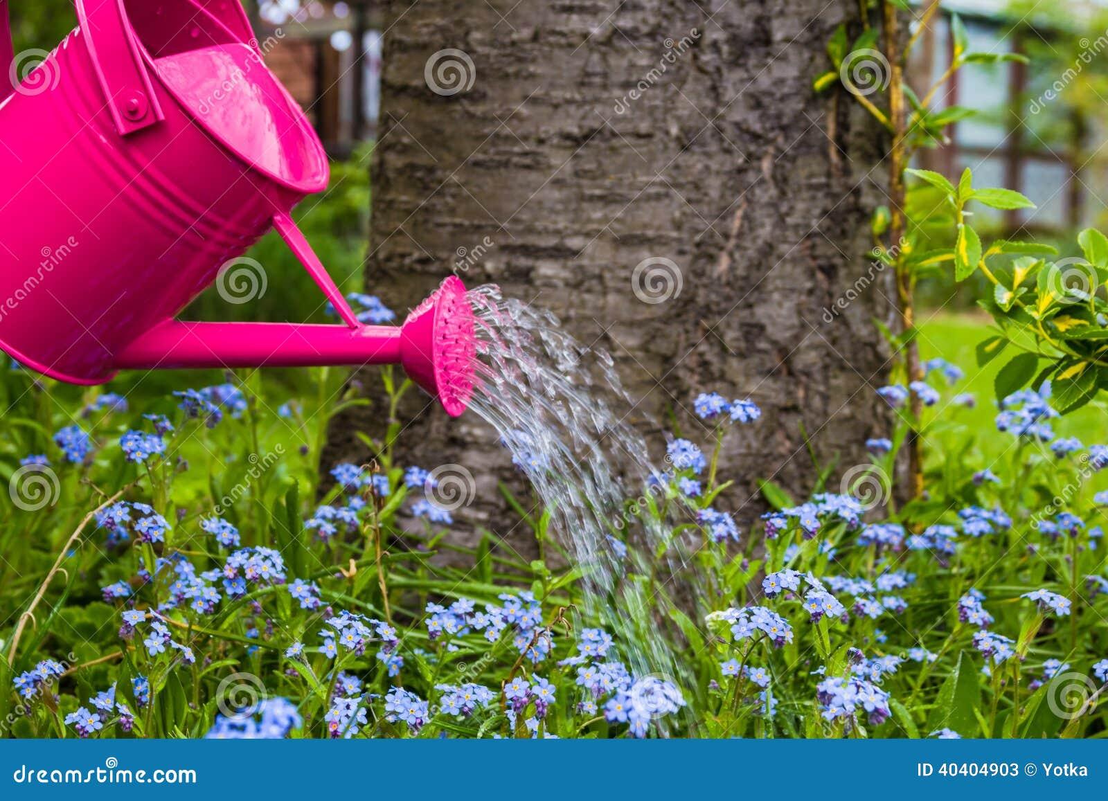 Jard n de flores de la primavera de riego del cuidado de for Aspersores para riego de jardin