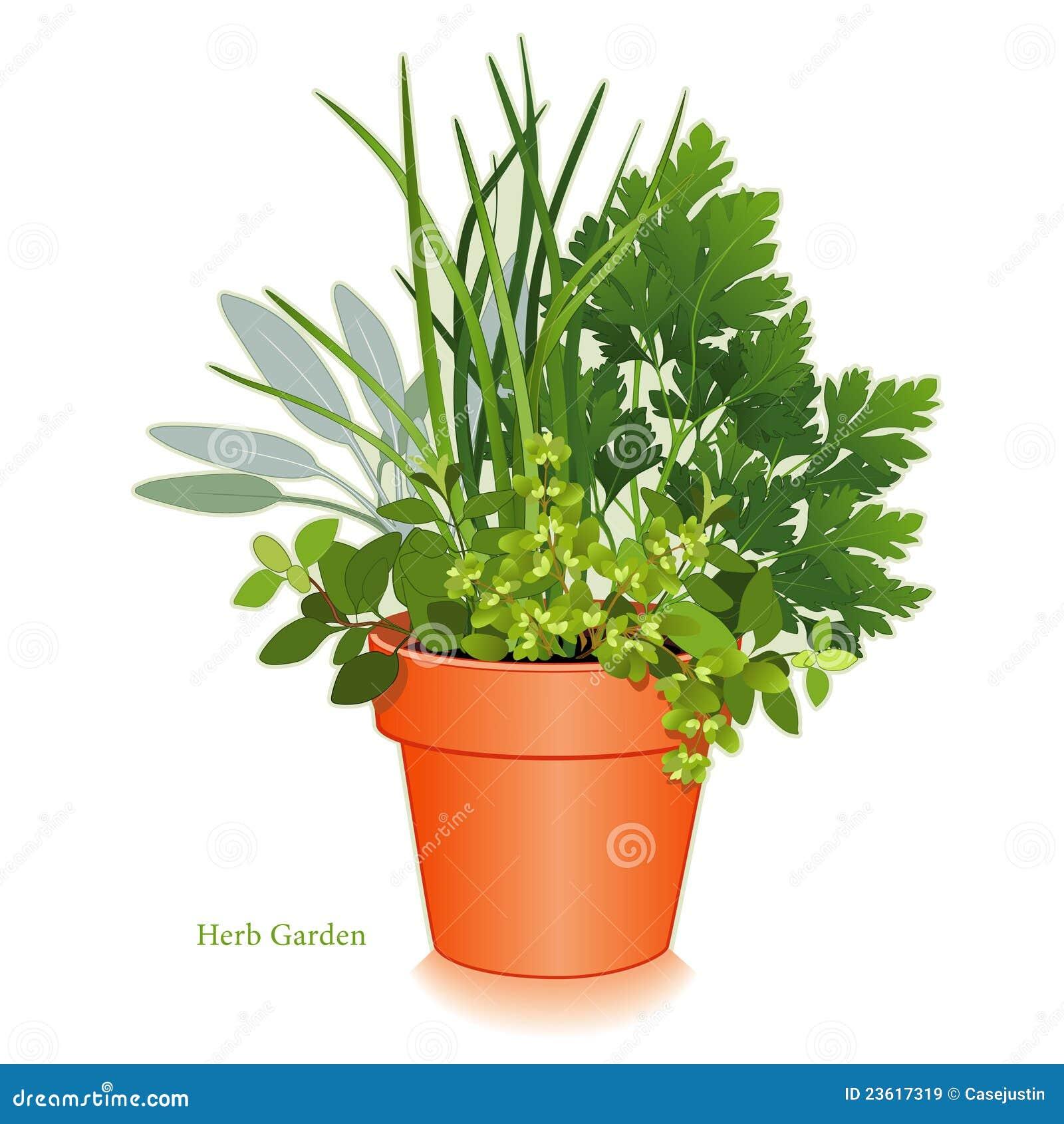 Jard n de hierba en maceta de la arcilla im genes de - Hierba luisa en maceta ...