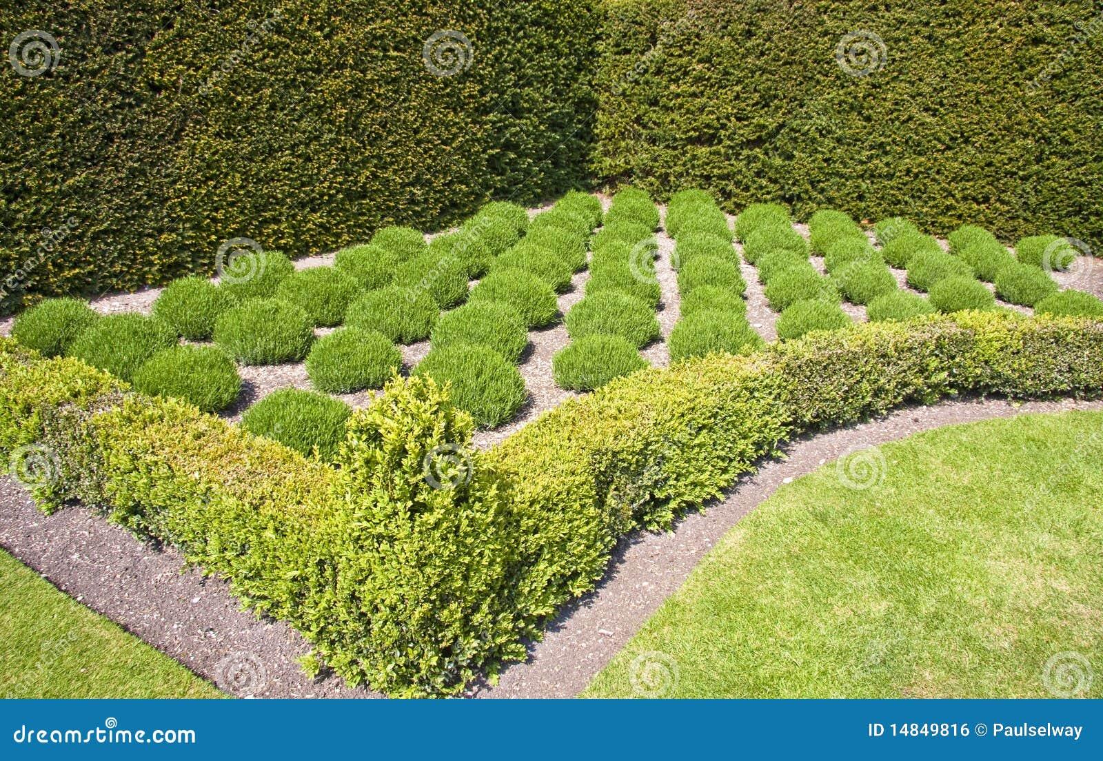 Jard n de hierba formal de la lavanda imagen de archivo for Hierba jardin