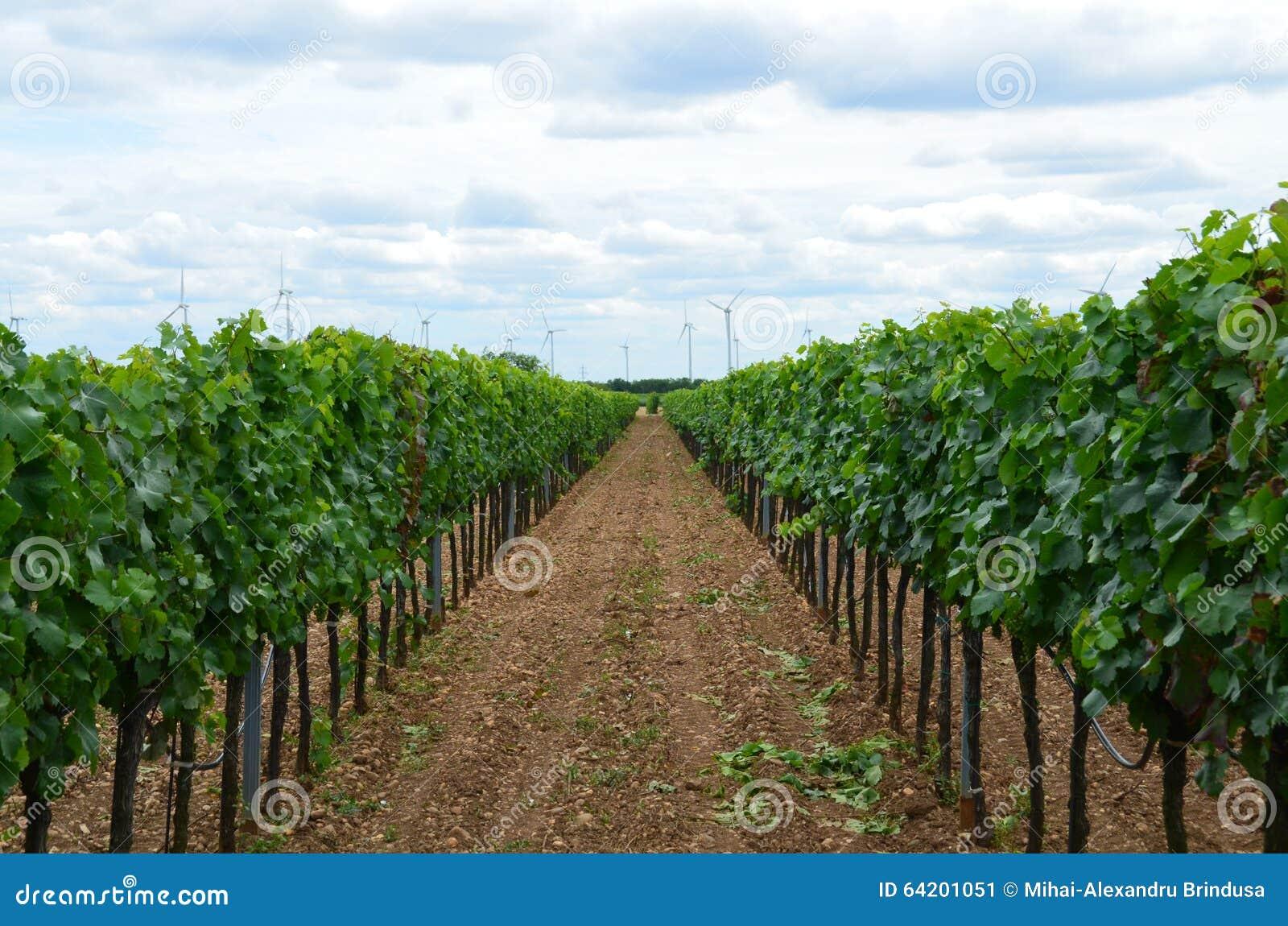 Jardín de la uva