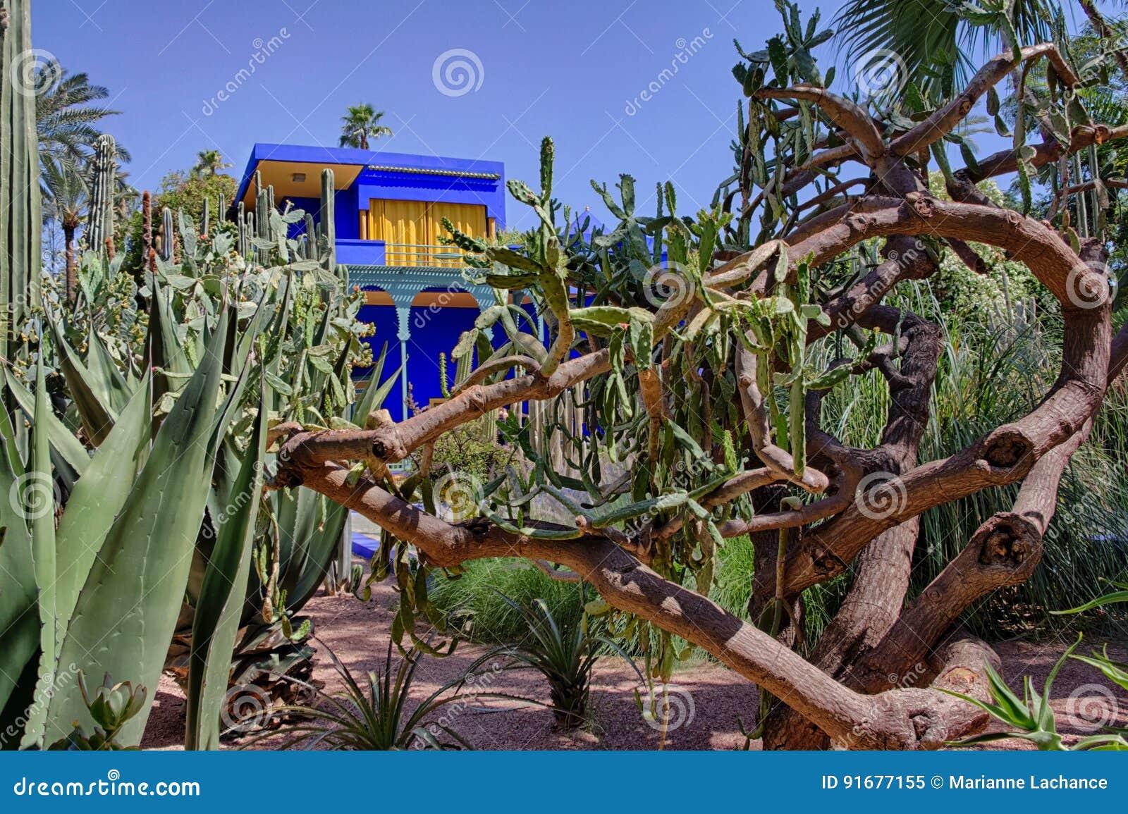 Jardin De Majorelle En Marruecos Imagen De Archivo Imagen De