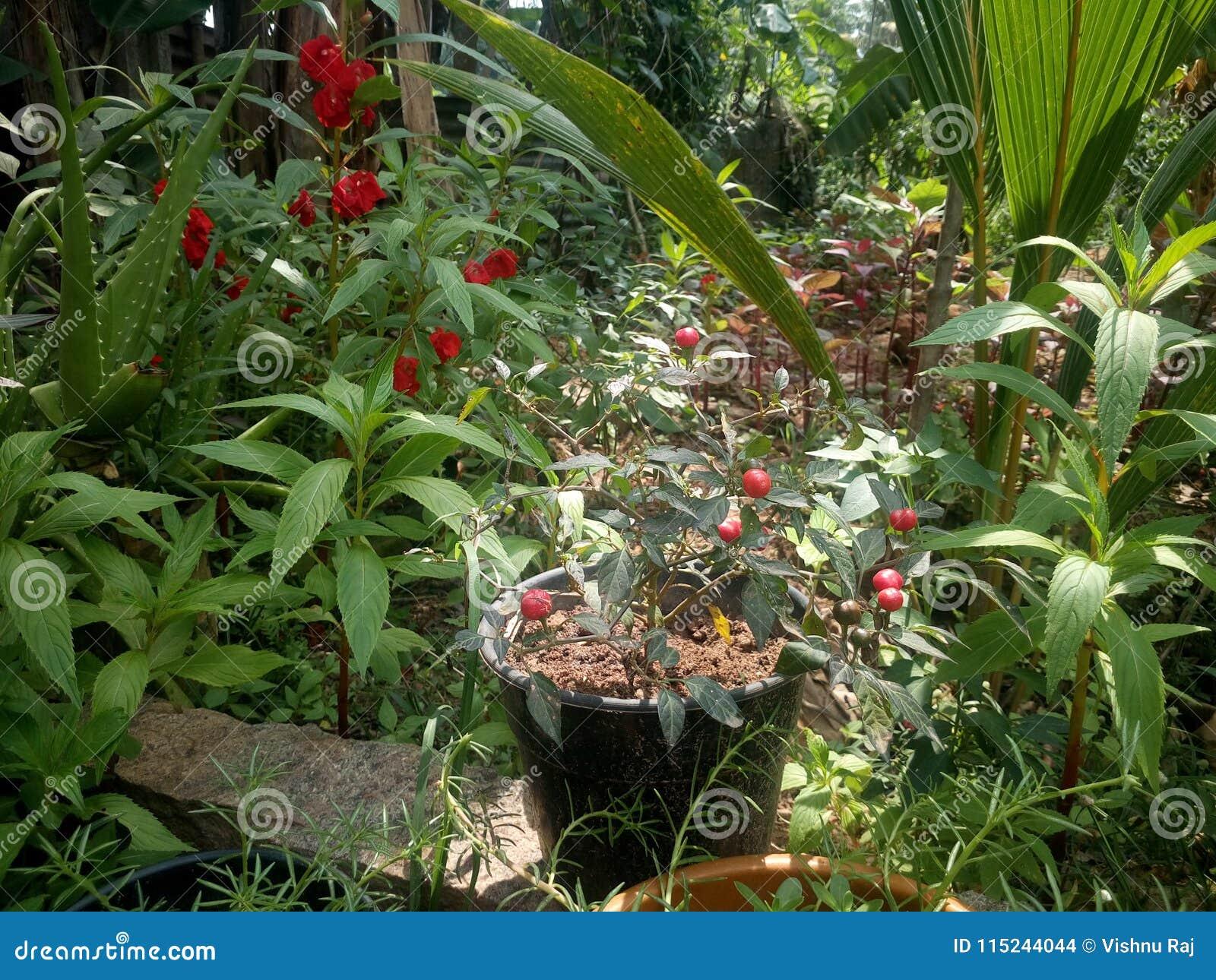 Jardín de plantas y de la flor