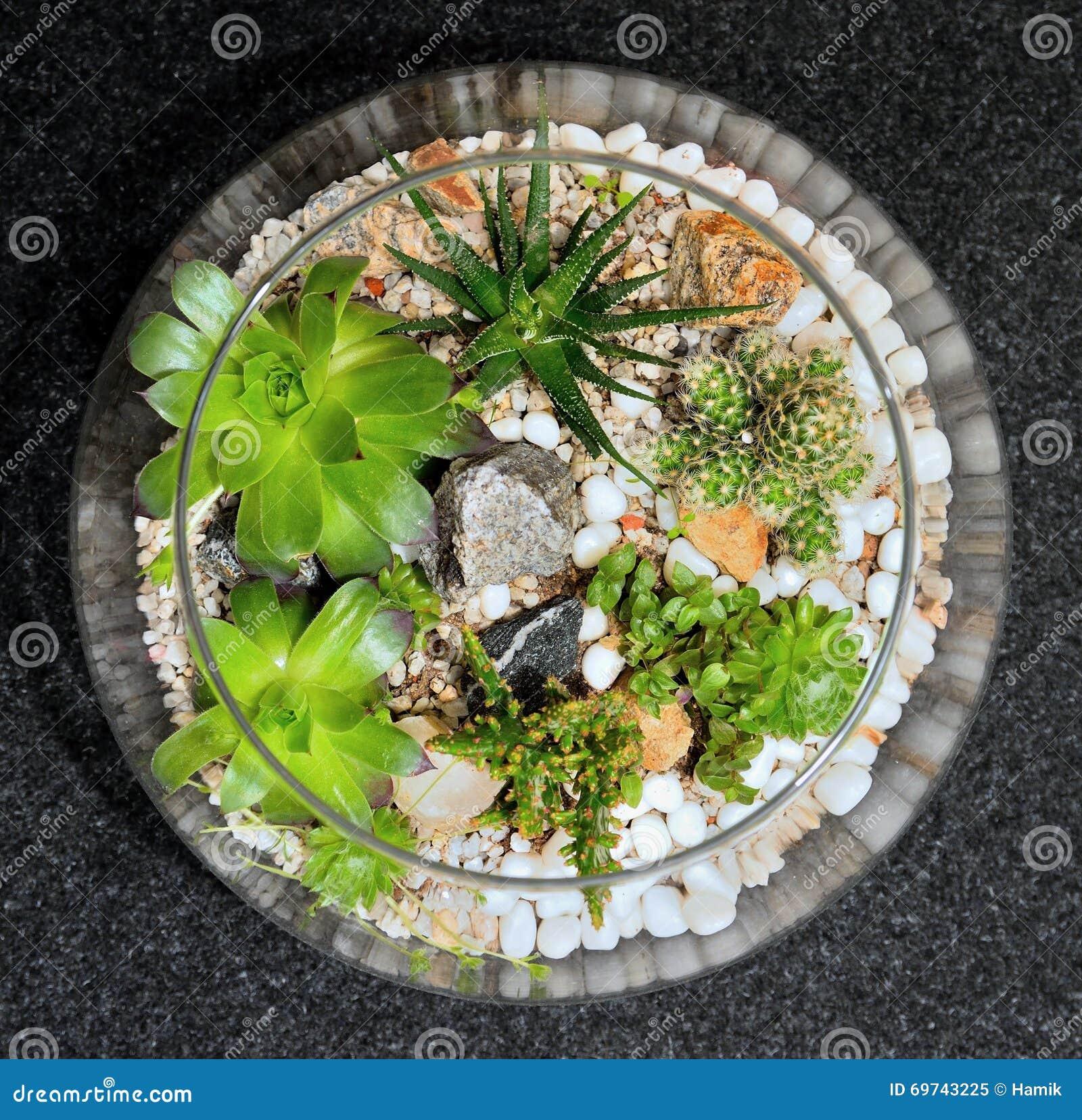 Jardín decorativo de la planta de la sobremesa