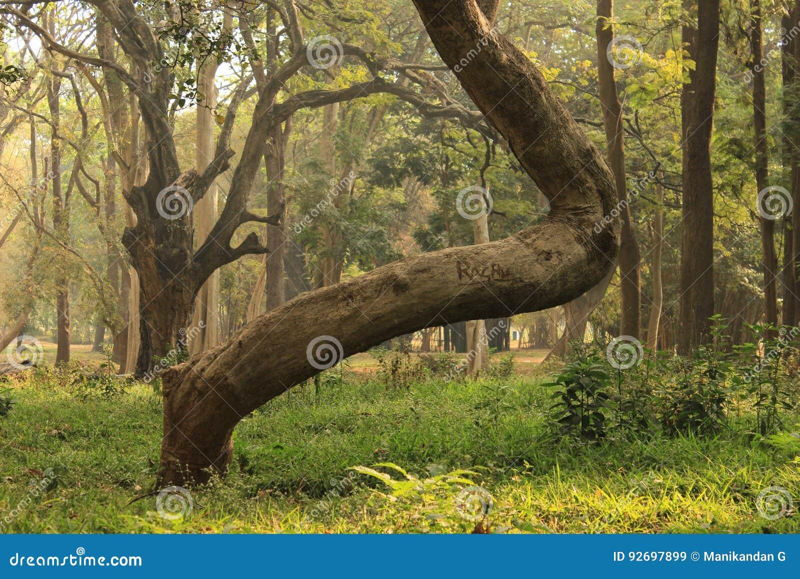 Jardín del árbol en el parque de Cubbon en Bangalore la India