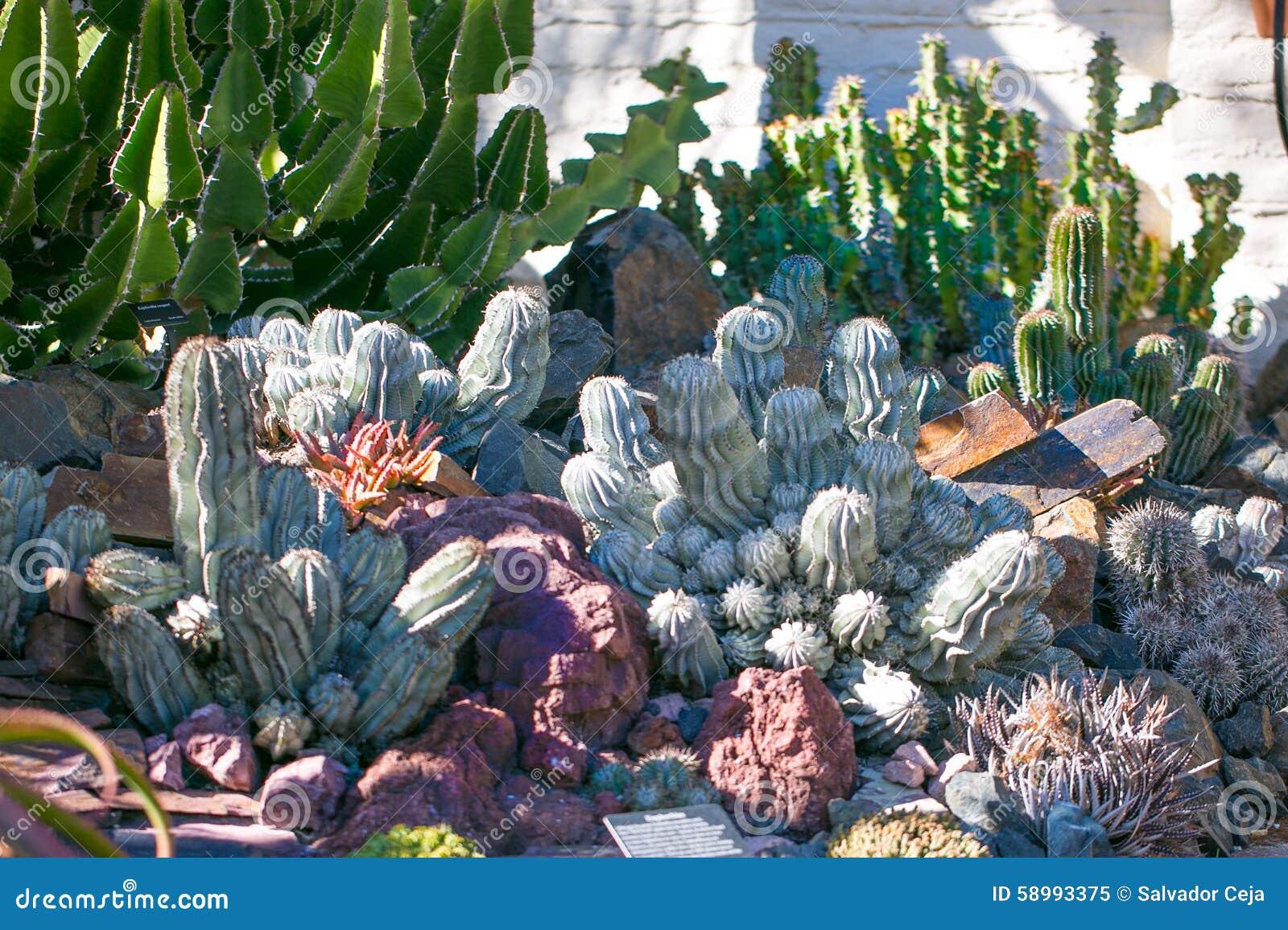 Jard n del desierto con los succulents foto de archivo for Jardin del desierto