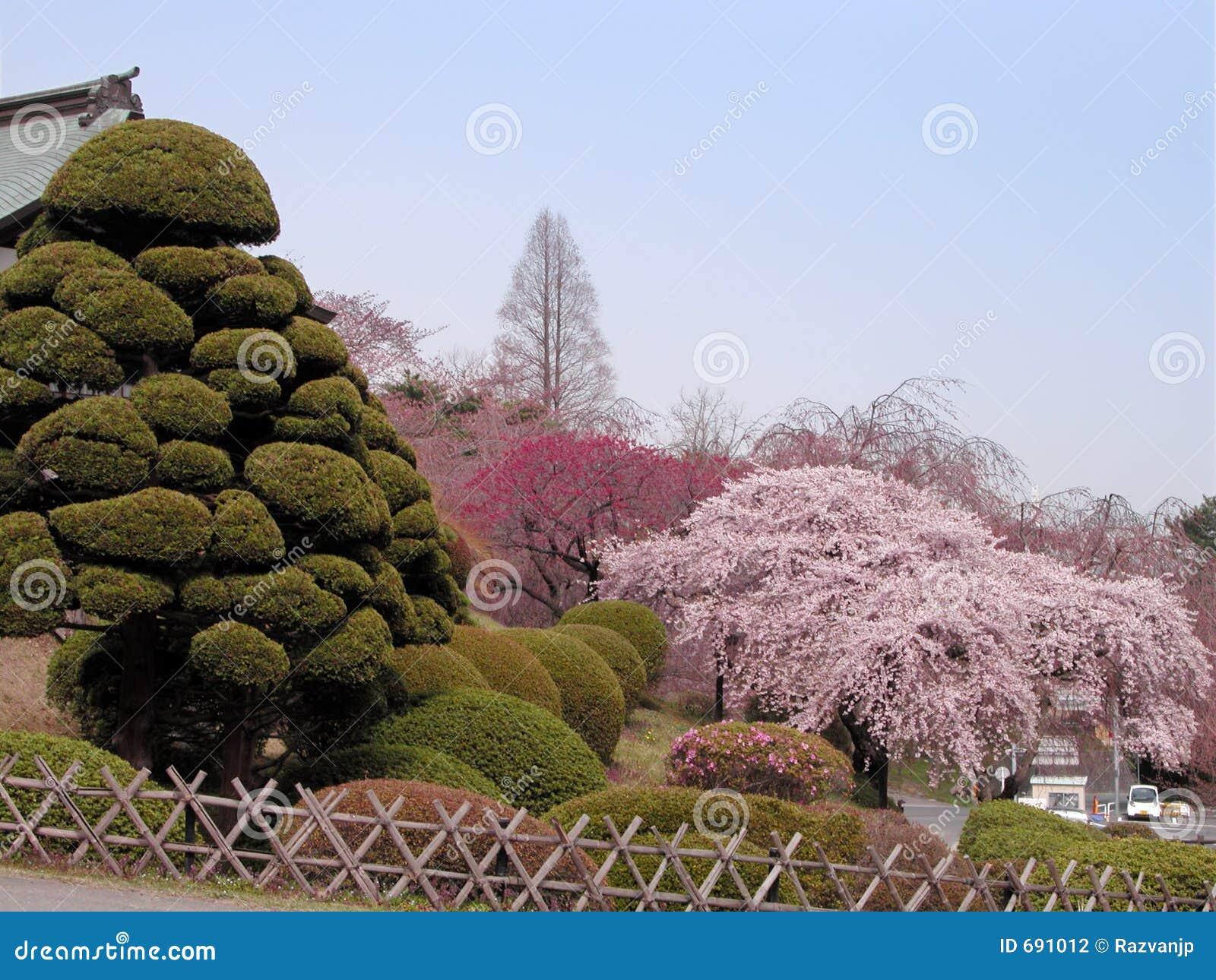 Jardín del japonés del resorte