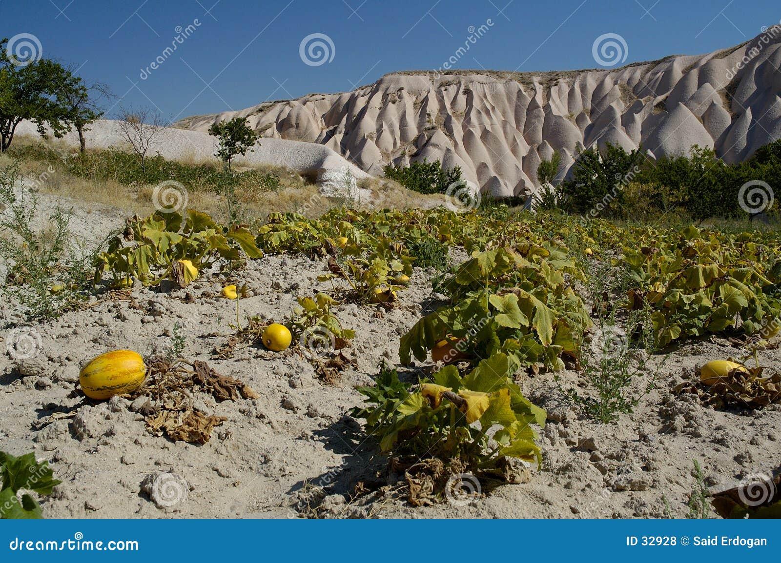 Jardín del melón/de la calabaza en el cappadocia II