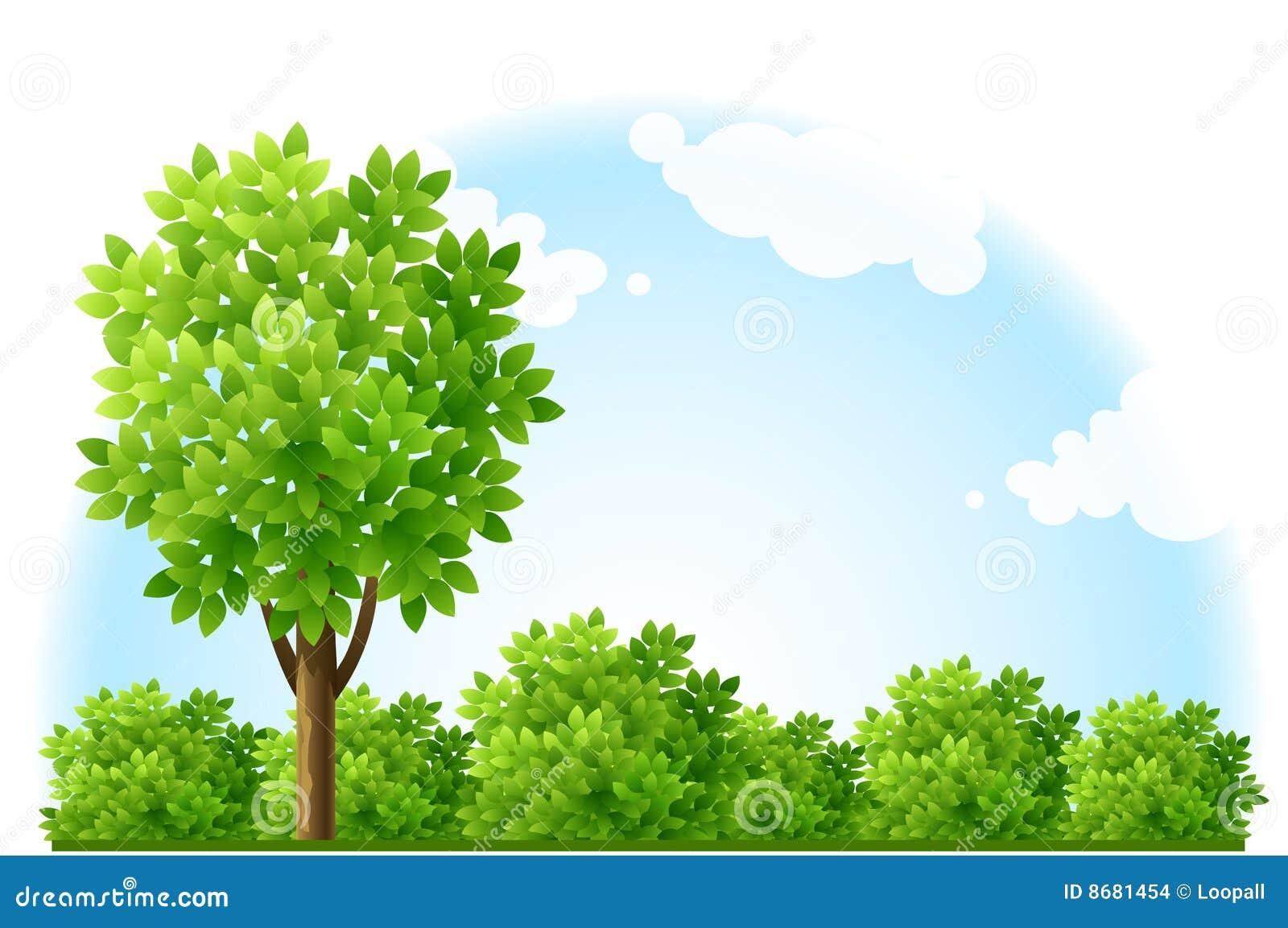 Jard n del verano con el rbol y los arbustos verdes stock for Jardines con arboles y arbustos