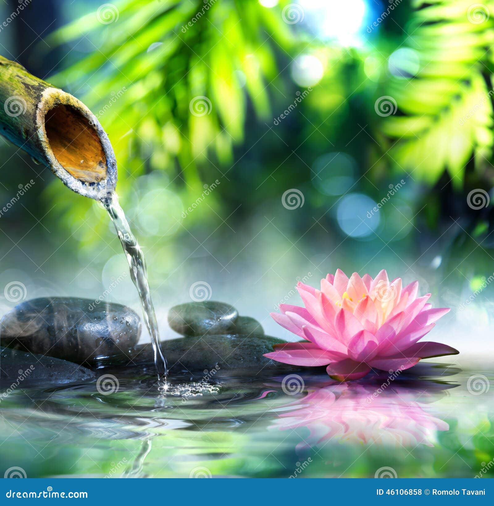 Jard n del zen con las piedras negras y waterlily foto de for Piedras negras para jardin