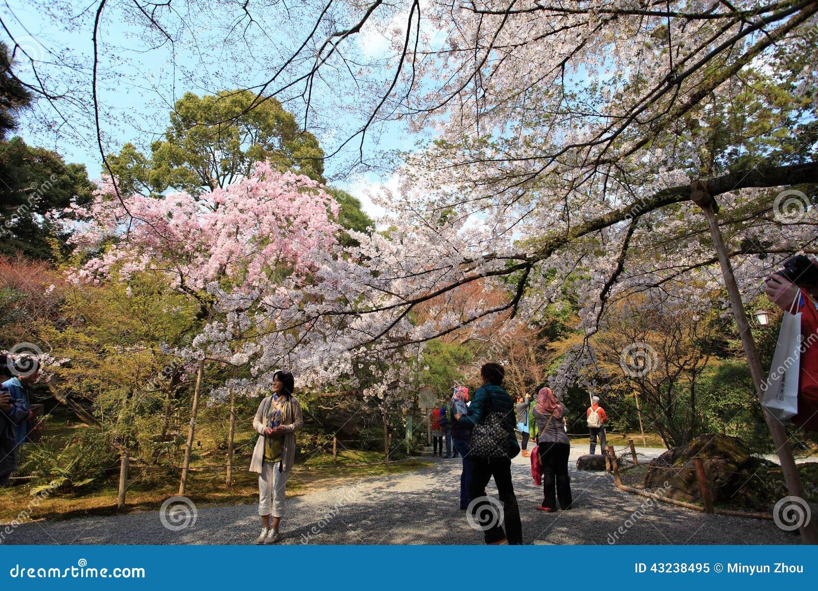 Jardín en el templo de Ryoan-ji