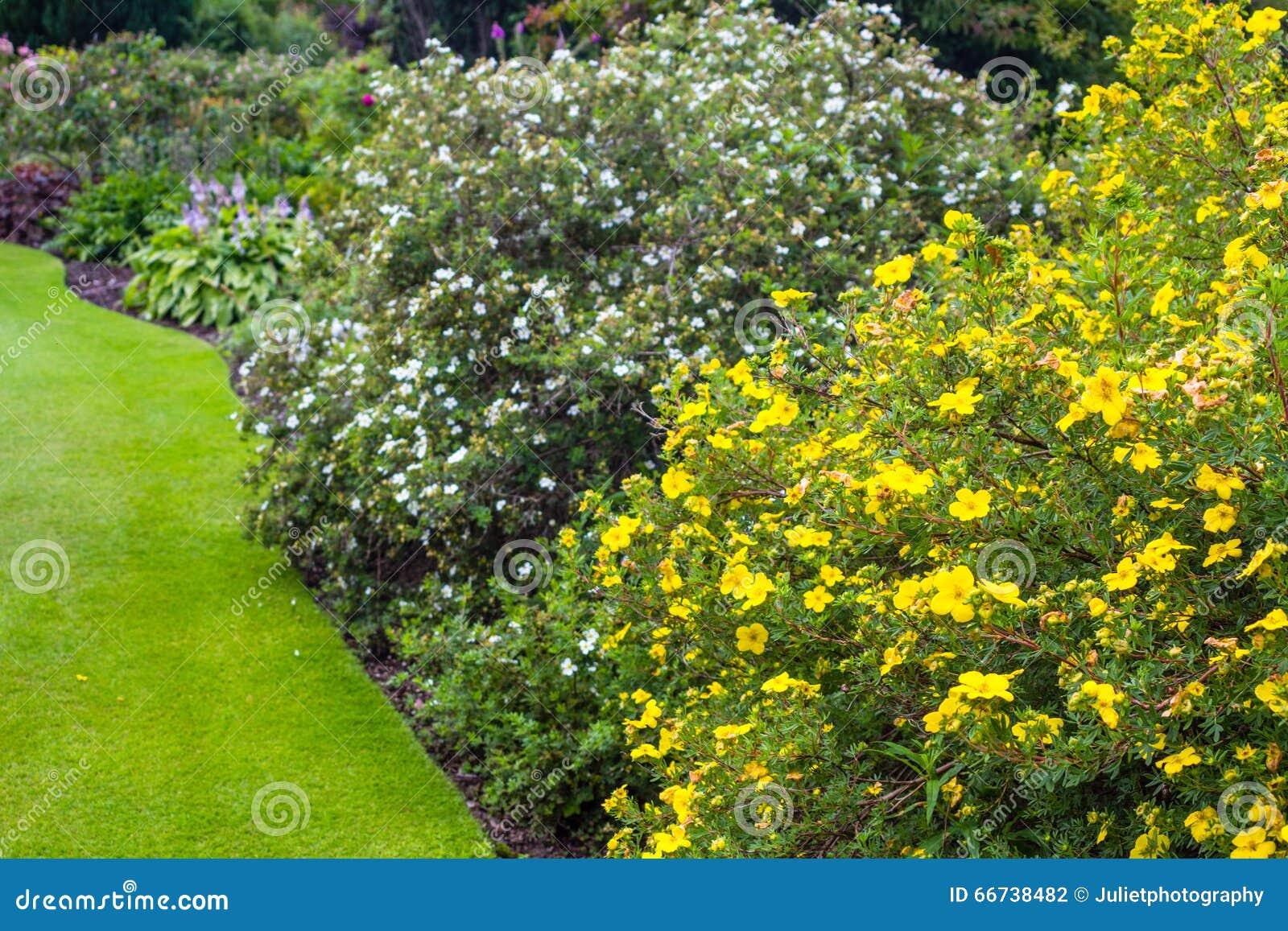 Jard n hermoso con la variedad de rboles y de arbustos for Jardines con arboles y arbustos