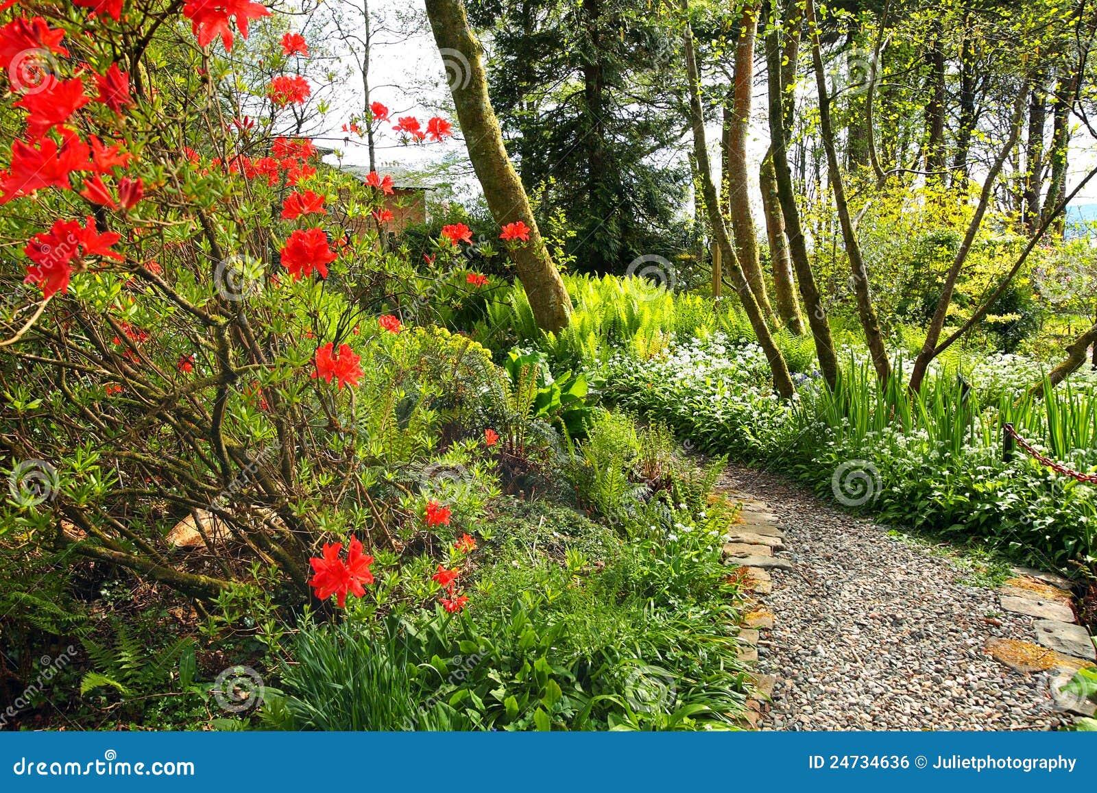 Jard n hermoso del resorte con el rbol rojo de la azalea for Arbol rojo jardin