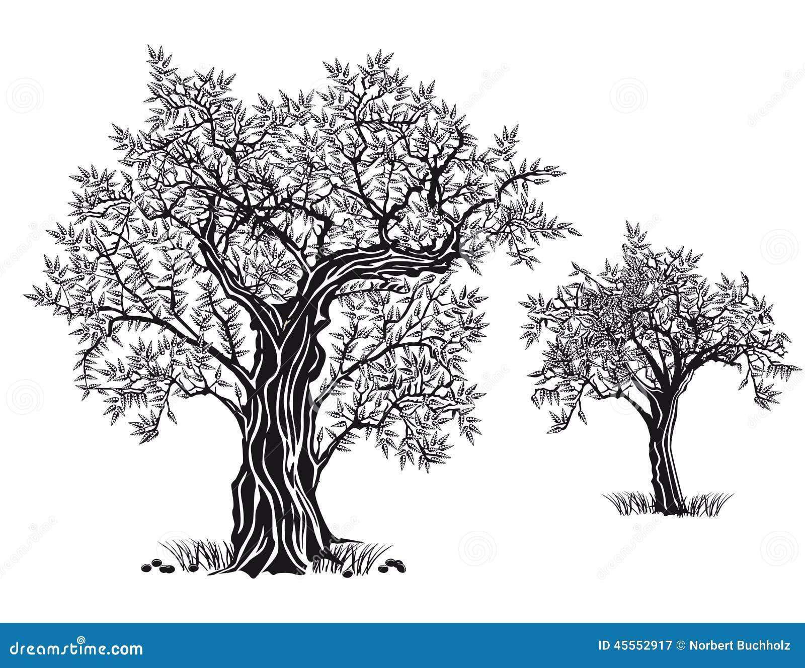 Jardín mediterráneo, primer la rama