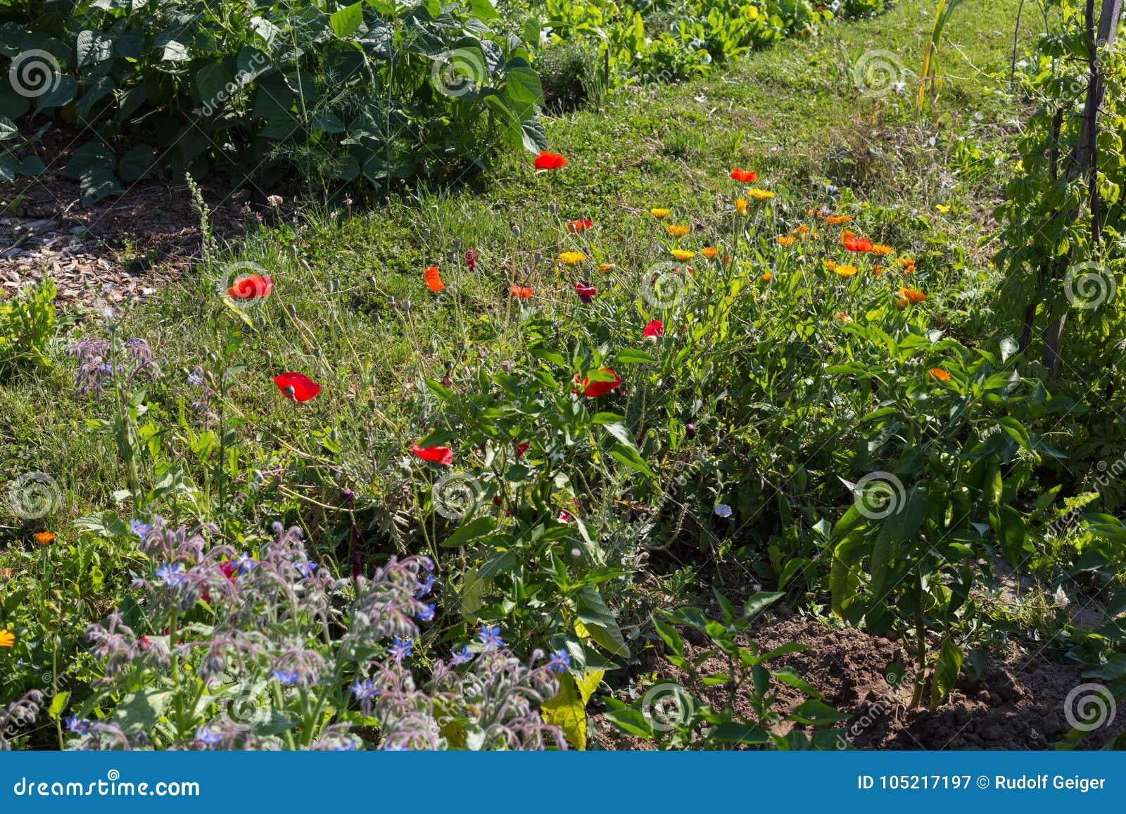 Jardín rural de la cabaña en el día de verano caliente de julio