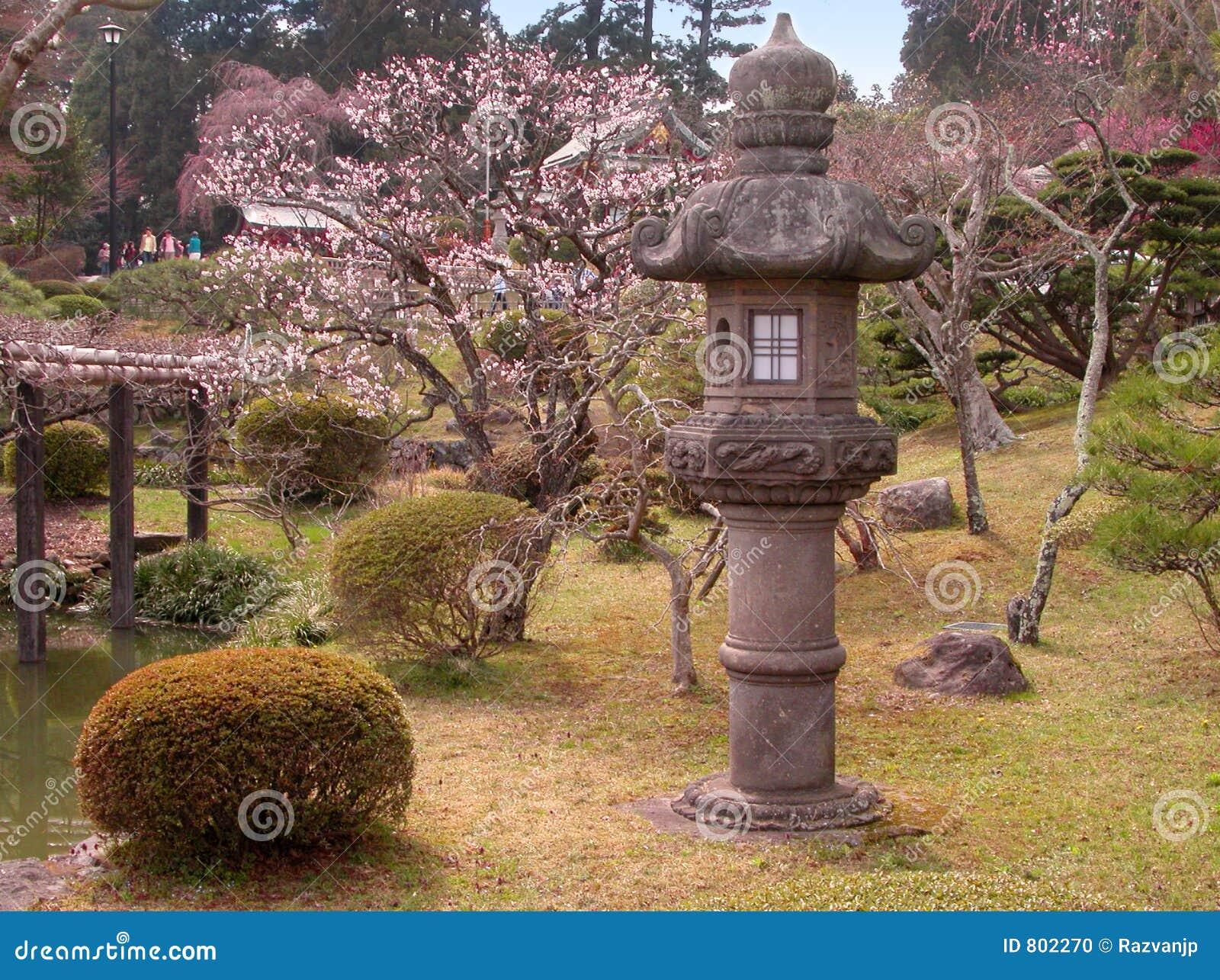 Jardín temprano del japonés del resorte
