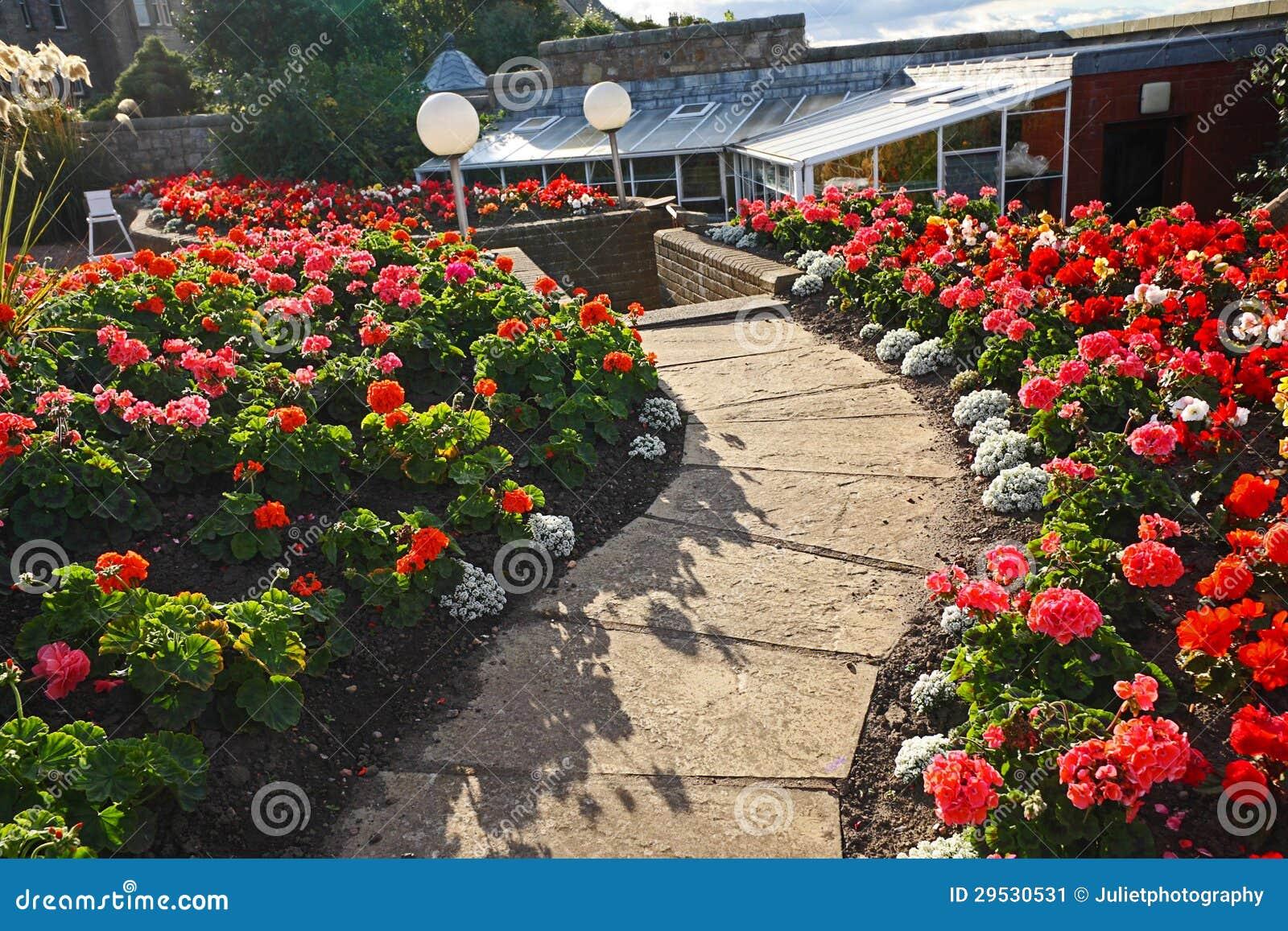 jardim rosas vermelhas:Jardim Bonito Com As Flores Vermelhas Do Gerânio Imagem de Stock