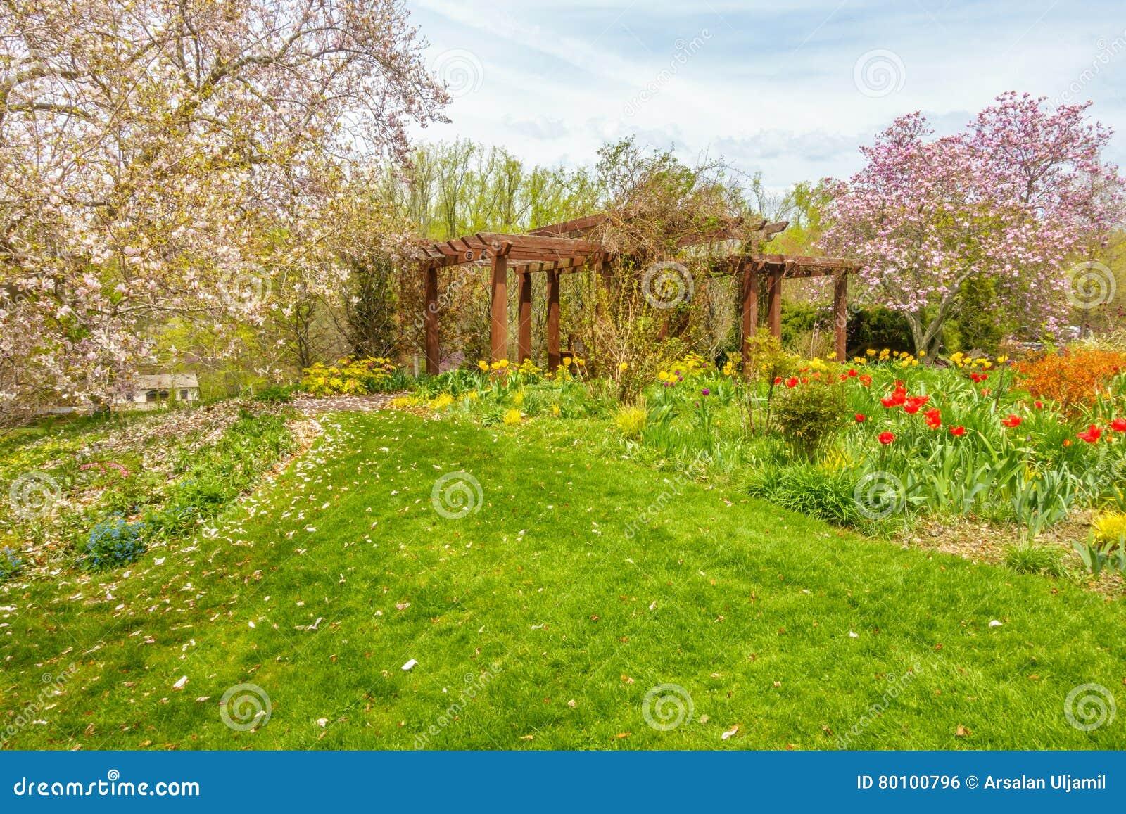 Jardim bonito com flores coloridas