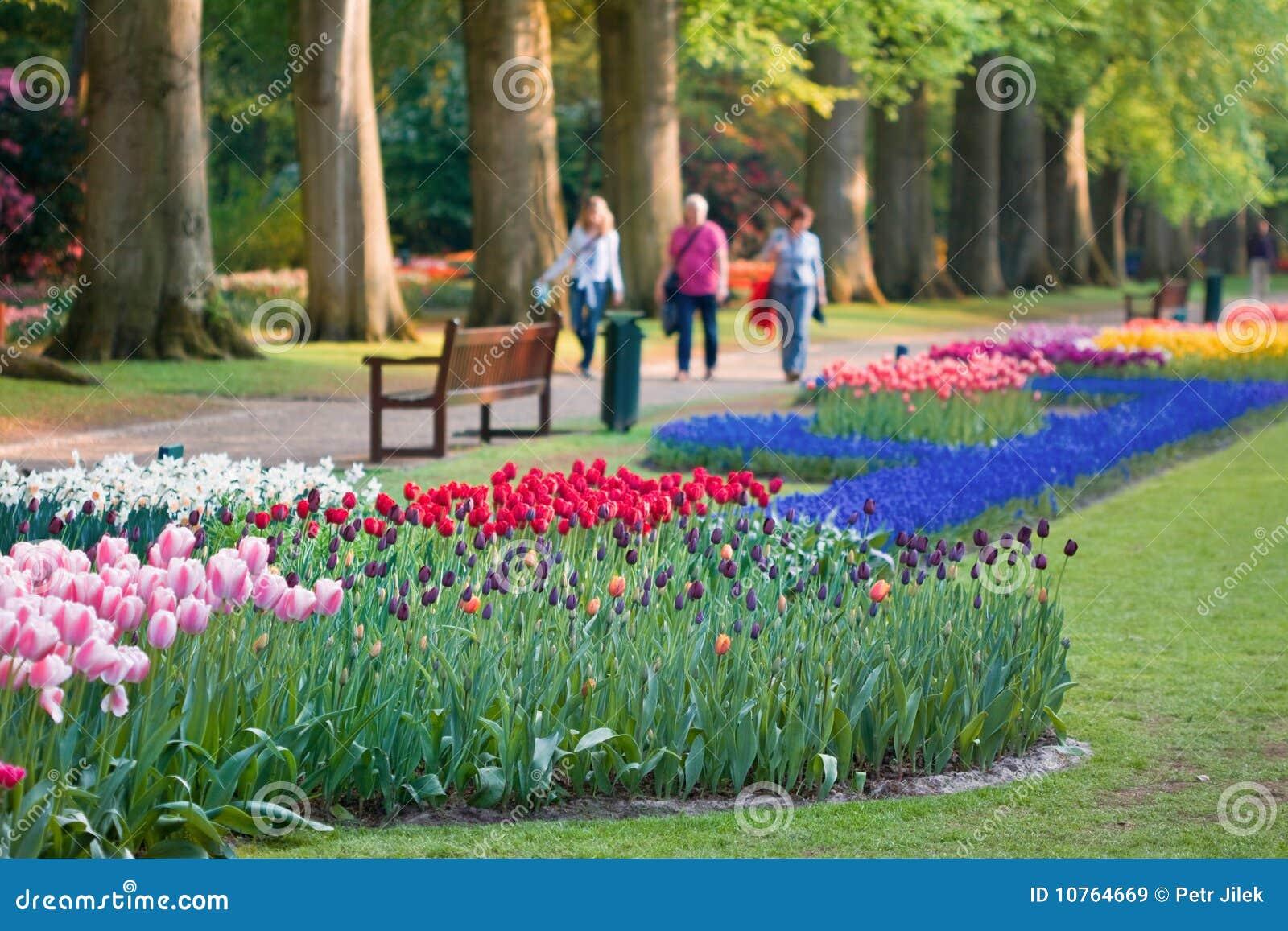 flores coloridas jardim:Jardim Bonito De Flores Coloridas Na Mola Imagens de Stock Royalty