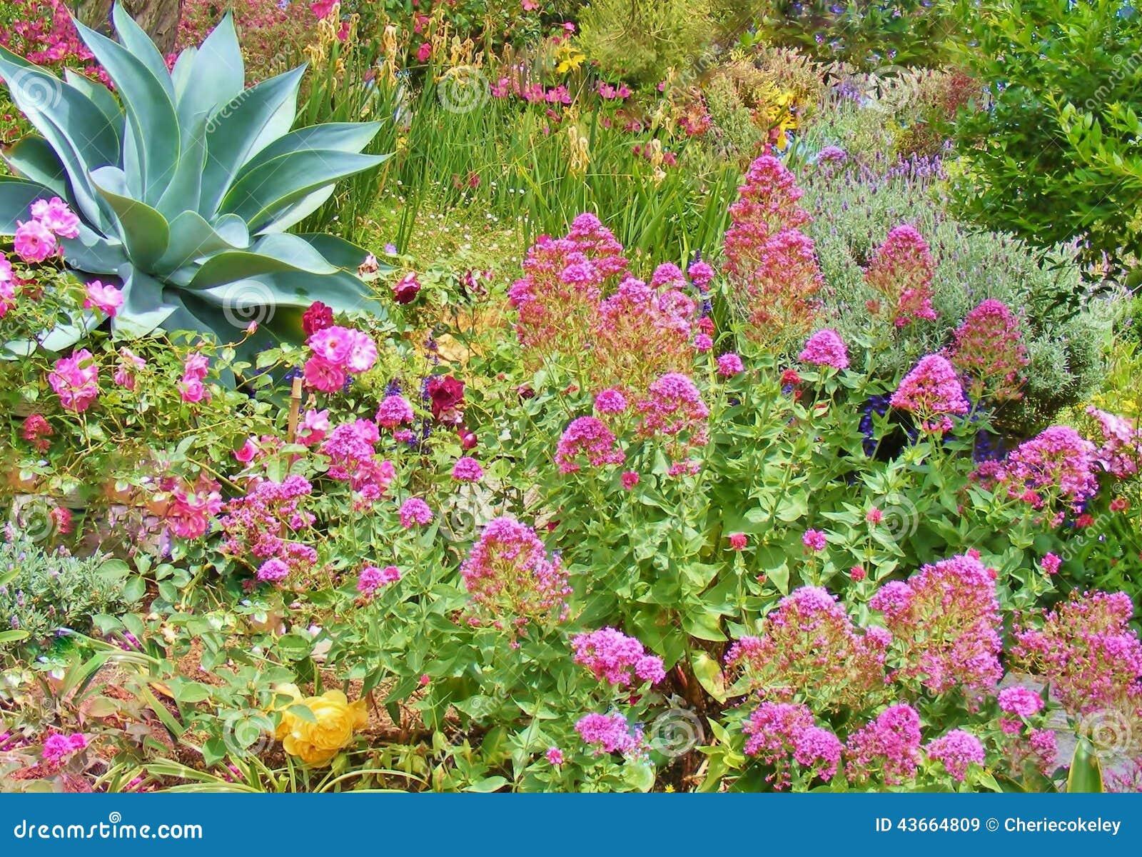 jardim flores e plantas:JARDIM BONITO DE PLANTAS E DE FLORES COLORIDAS Foto de Stock – Imagem