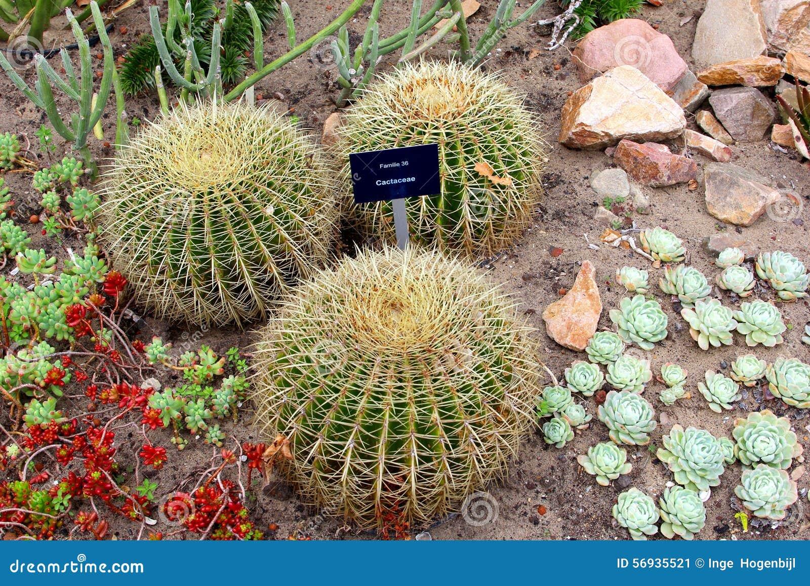 Jardine com cactos e as plantas suculentos nos jardins botânicos em