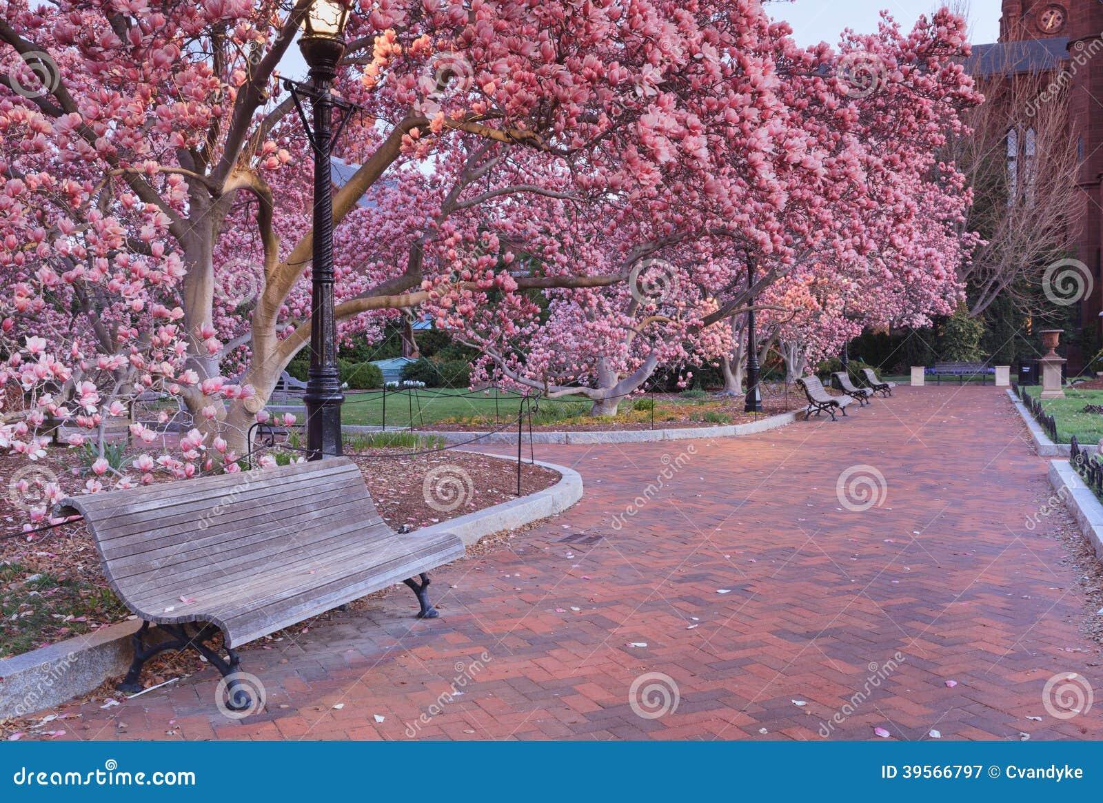 de parque conduz através de um jardim de árvores corderosa de