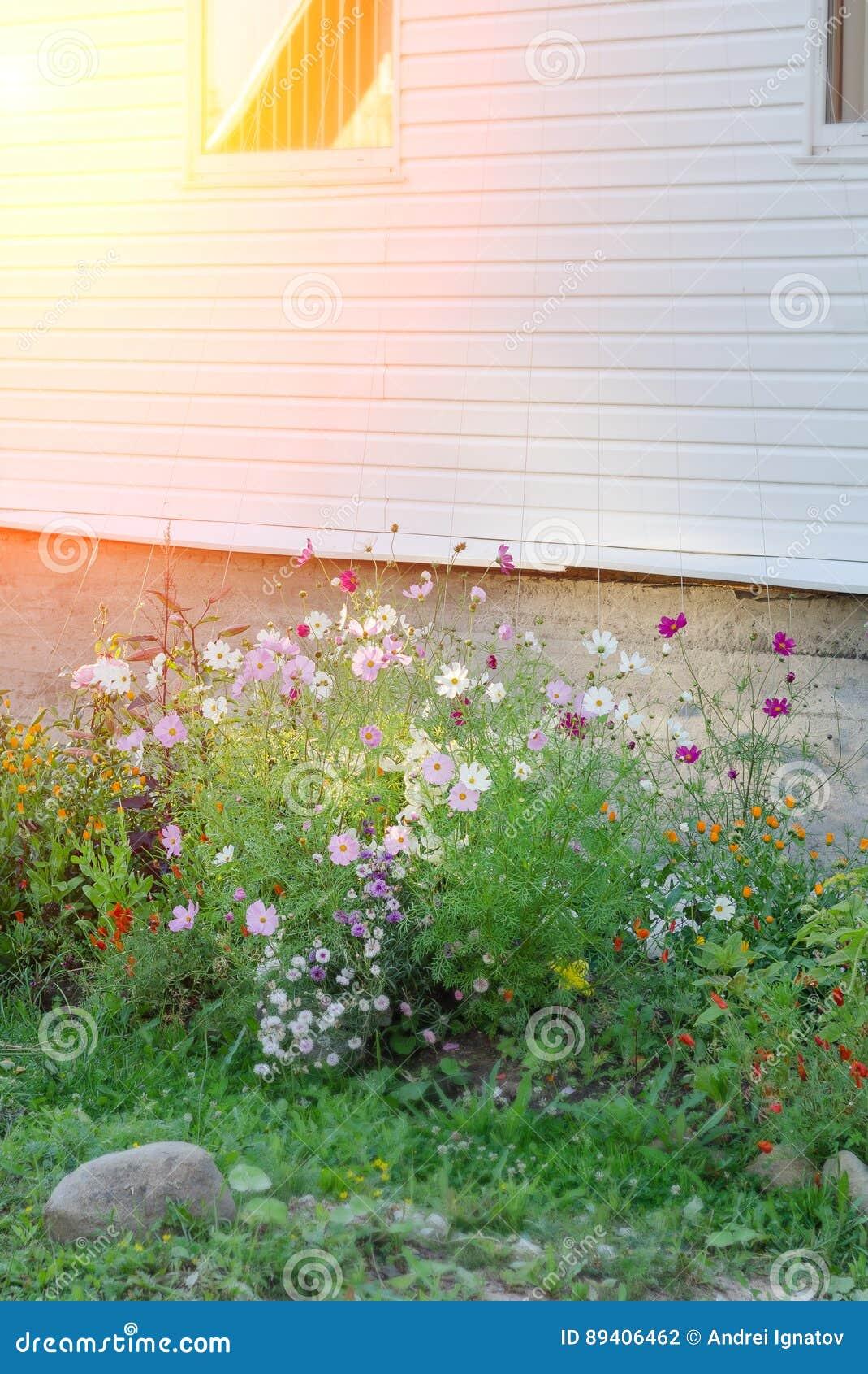 Jardim de flor ajardinado