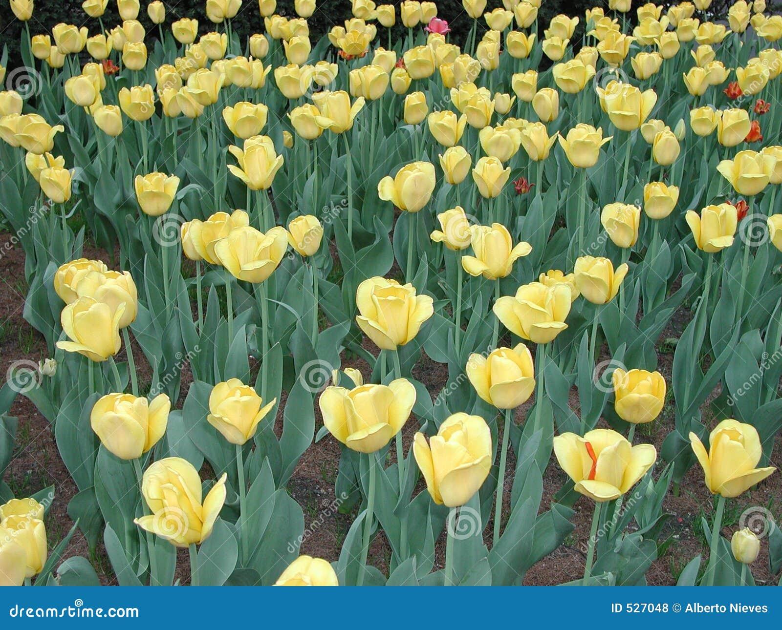 Jardim de flor amarelo