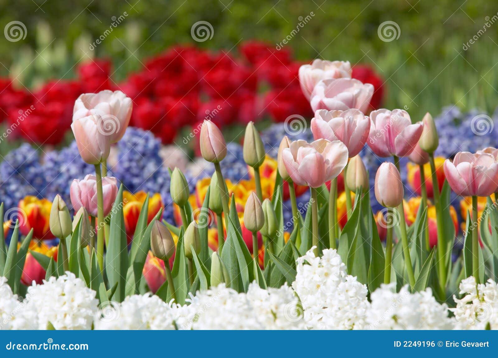 Jardim de flor colorido