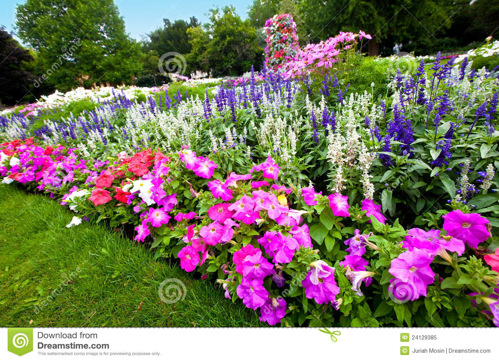 flores coloridas jardim:Azalea Flower Garden