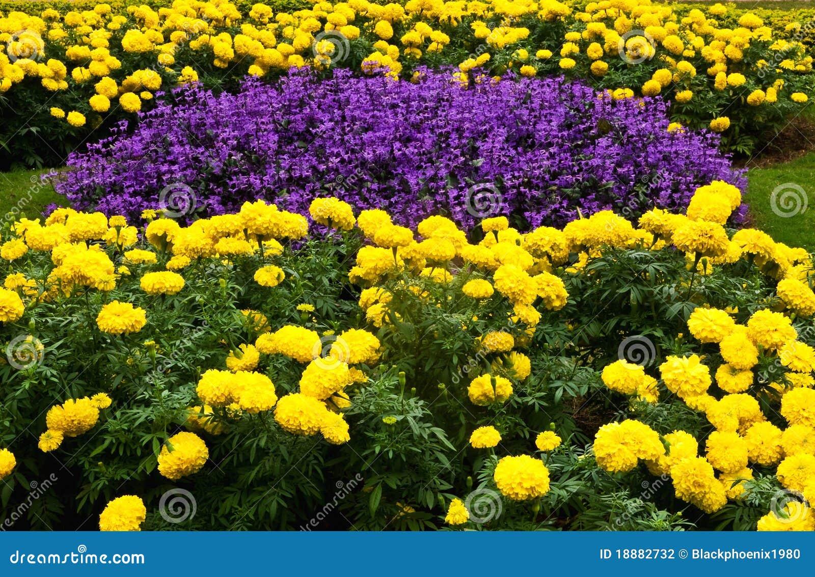 flor de jardim amarela:Purple and Yellow Flower Garden