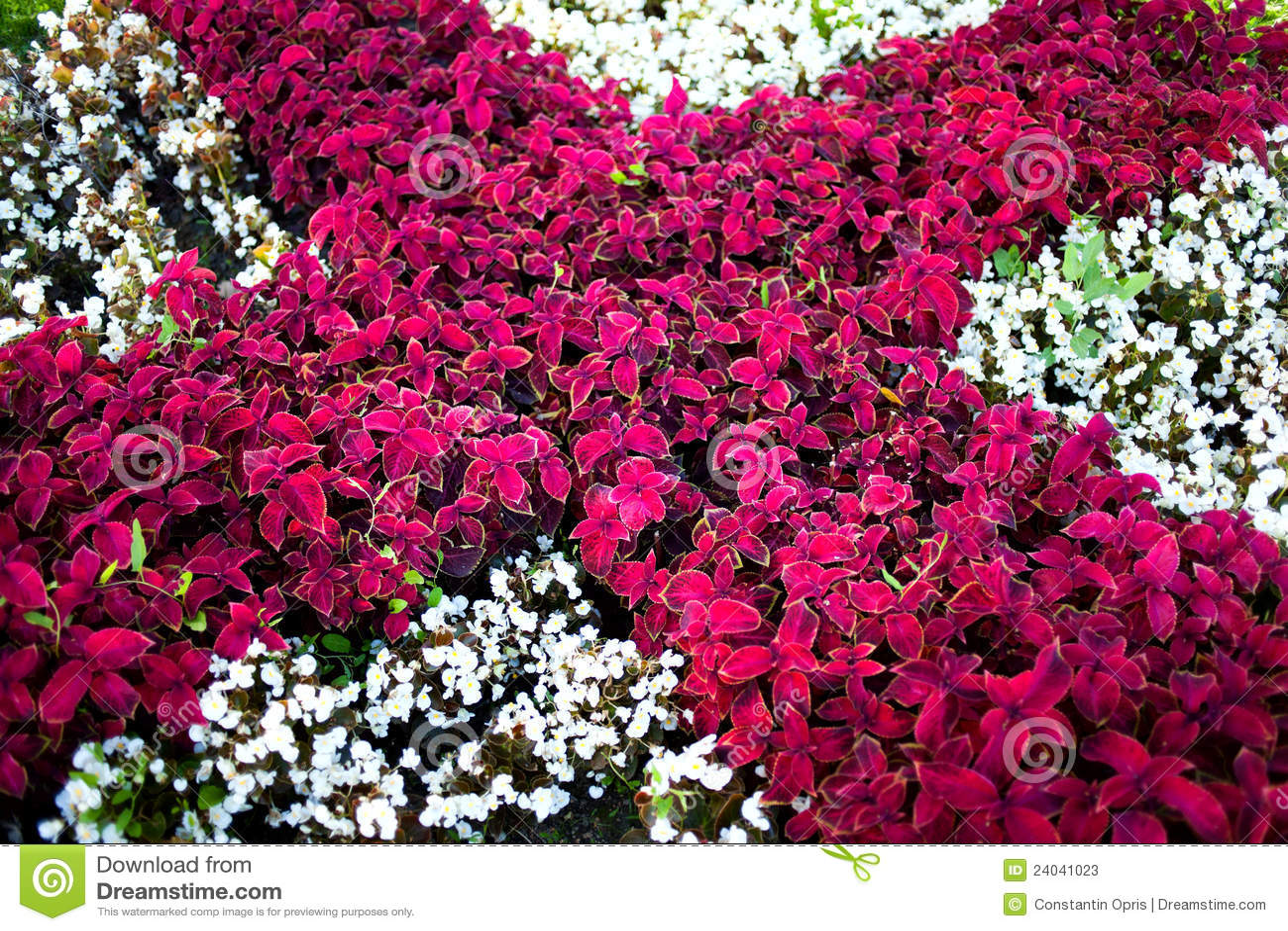 Jardim De Flores Fotos de Stock - Imagem: 24041023