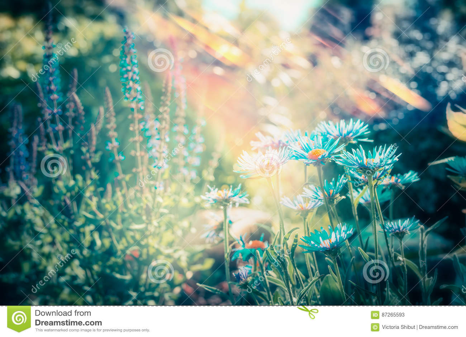 Jardim de flores bonito com florescência, natureza exterior