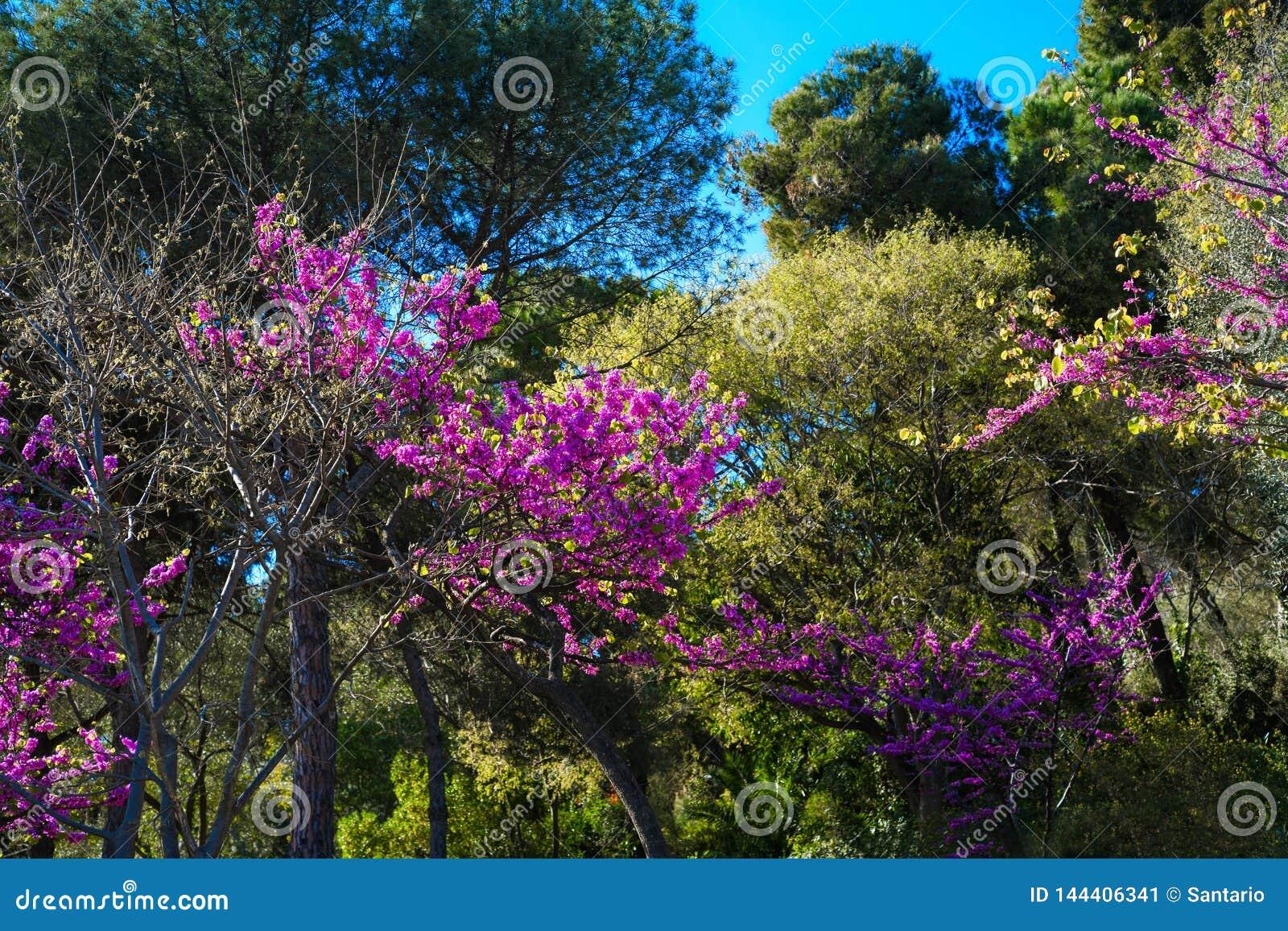 Jardim de florescência bonito com rosa, flores fúcsia, roxas