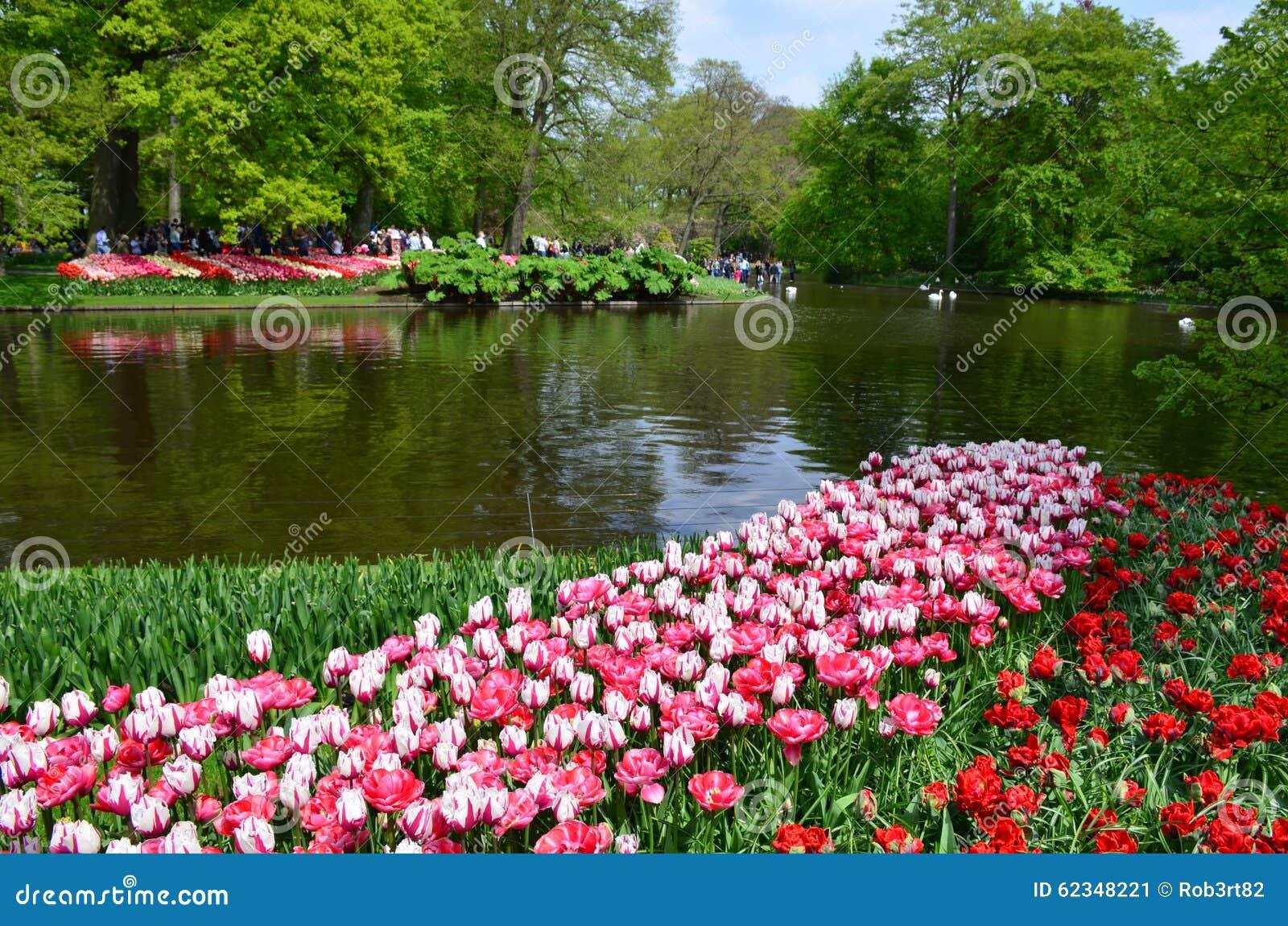flores coloridas jardim:Jardim de Keukenhof, Países Baixos Flores e flor coloridas no jardim