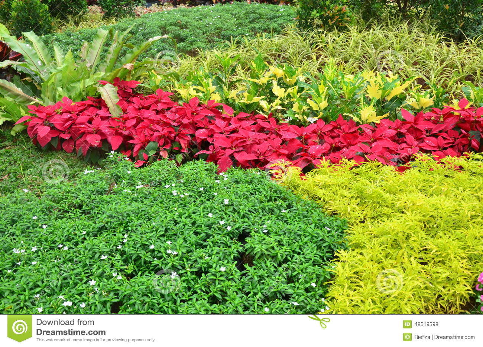 Jardim de plantas tropicais foto de stock imagem 48519598 for Catalogo de flores de jardin