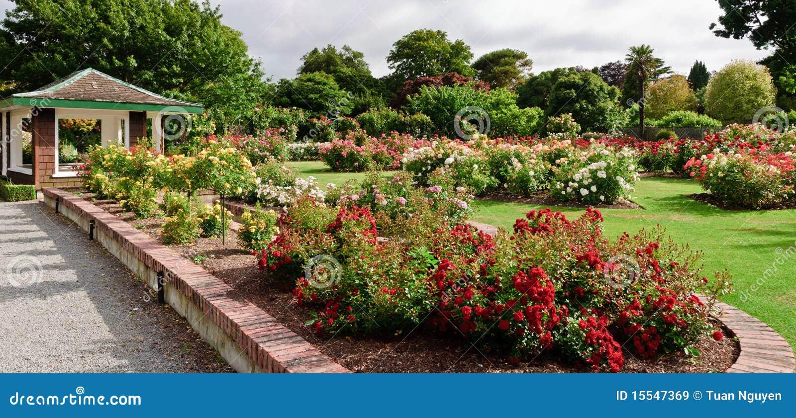 flores jardim de verao:Jardim de rosas na flor em um dia de verão glorioso em Christchurch