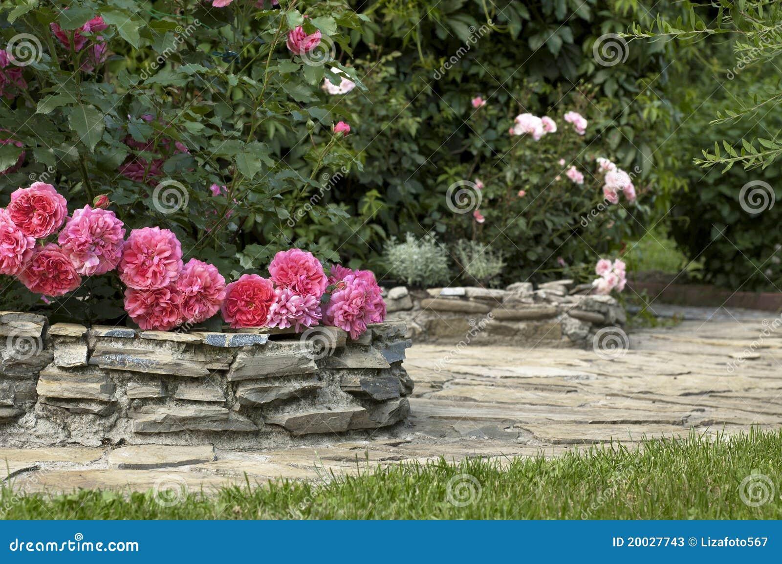 Jardim De Rosas Fotos de Stock  Imagem 20027743