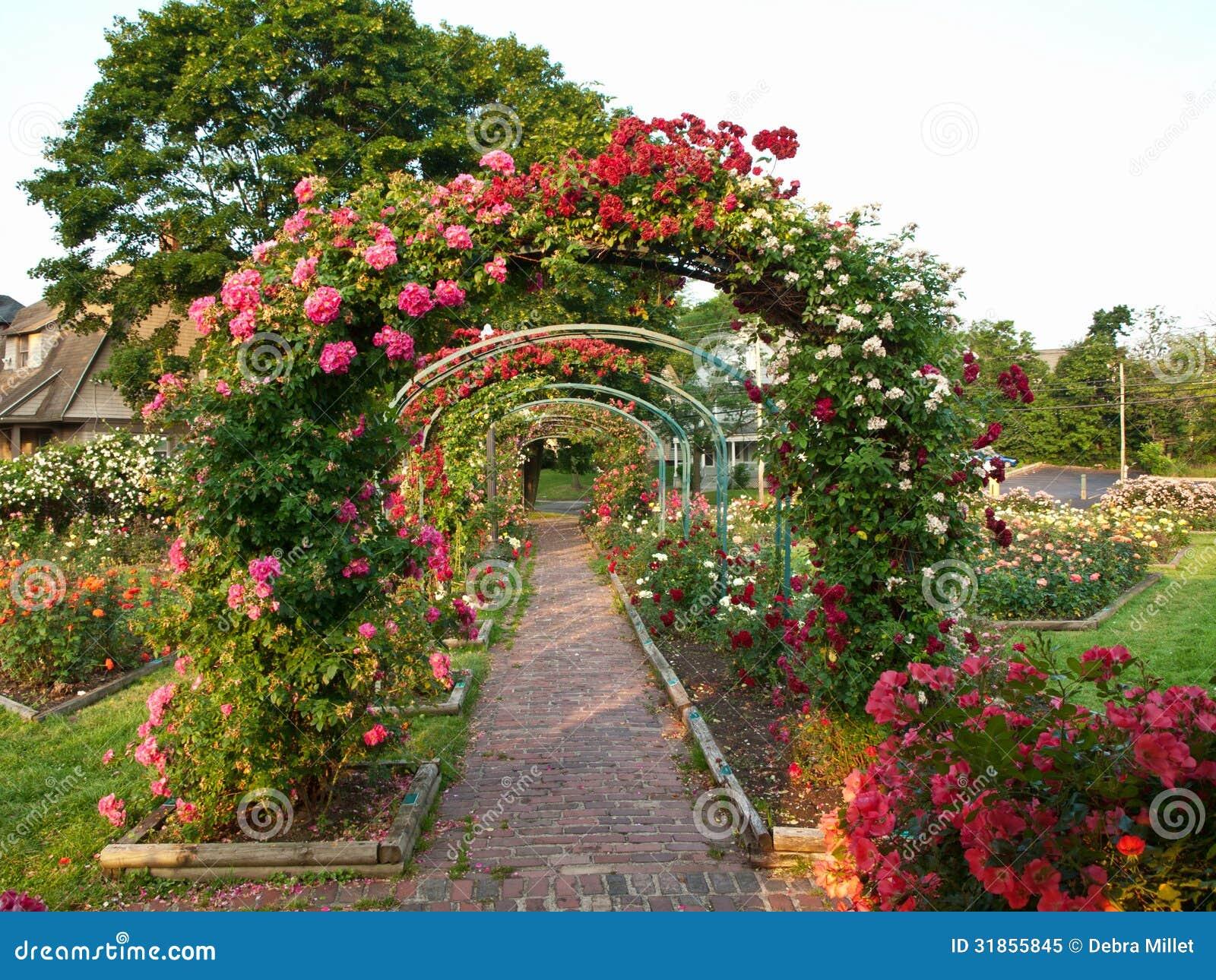 Jardim De Rosas Foto de Stock Royalty Free  Imagem 31855845