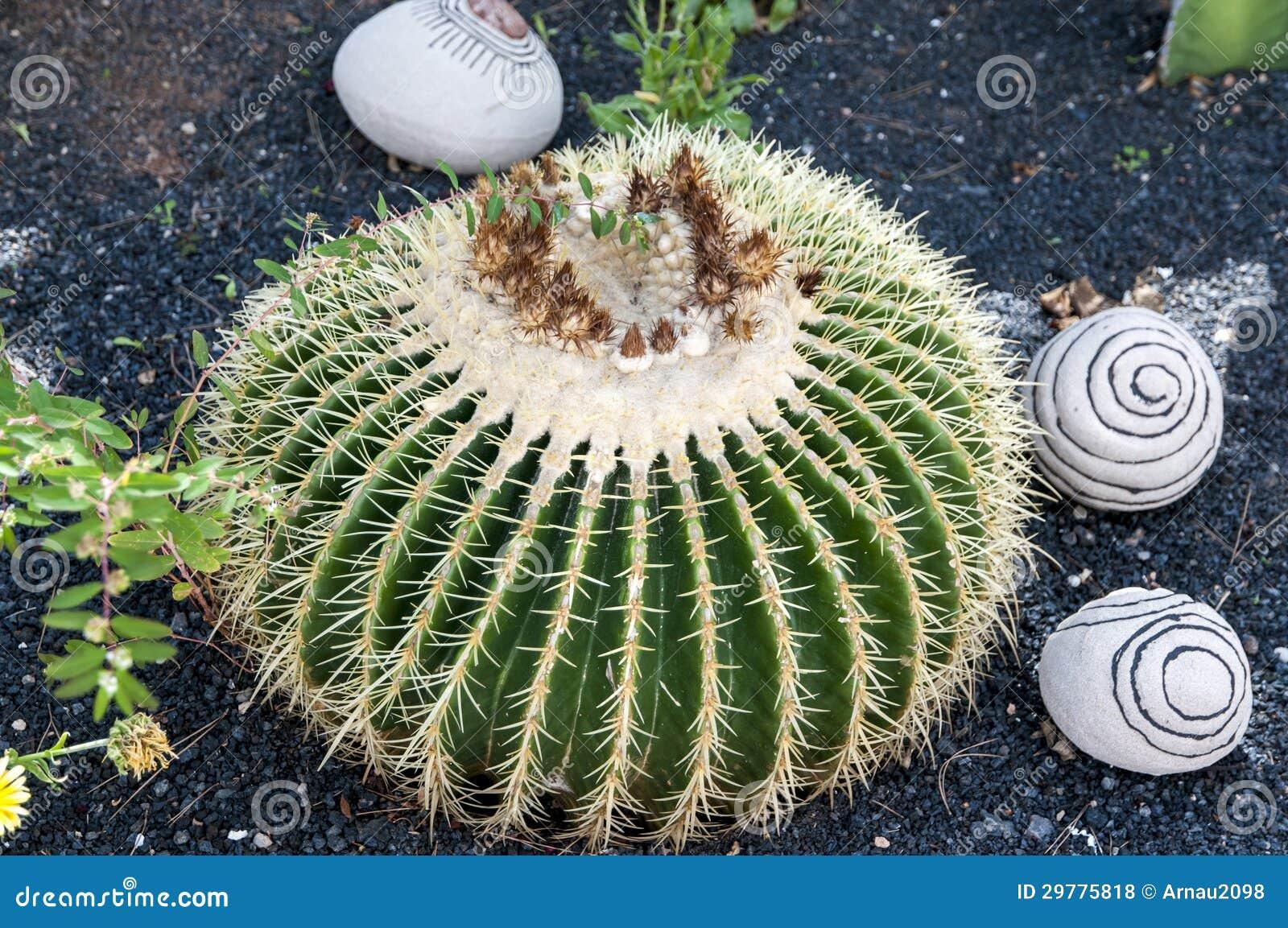 pedras de jardim branca:Decoração Do Jardim Fotos de Stock Royalty Free – Imagem: 29775818