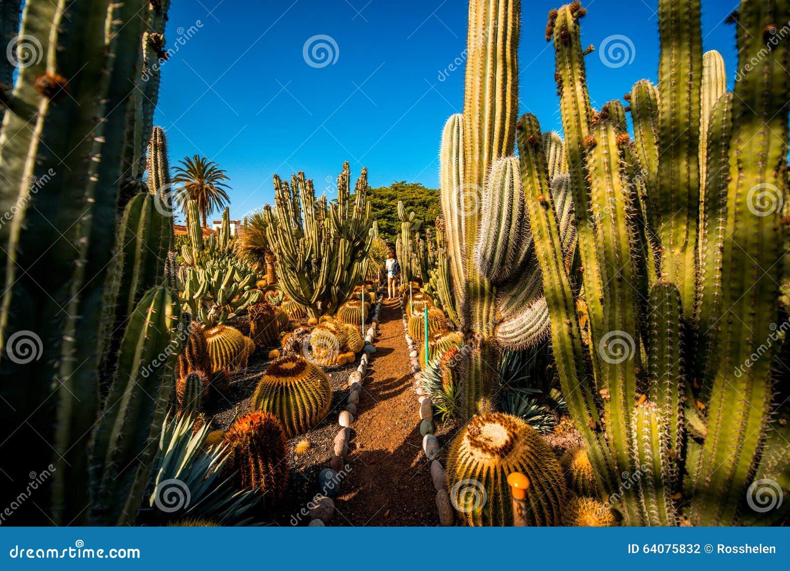 Jardim do cacto na ilha de Gran Canaria