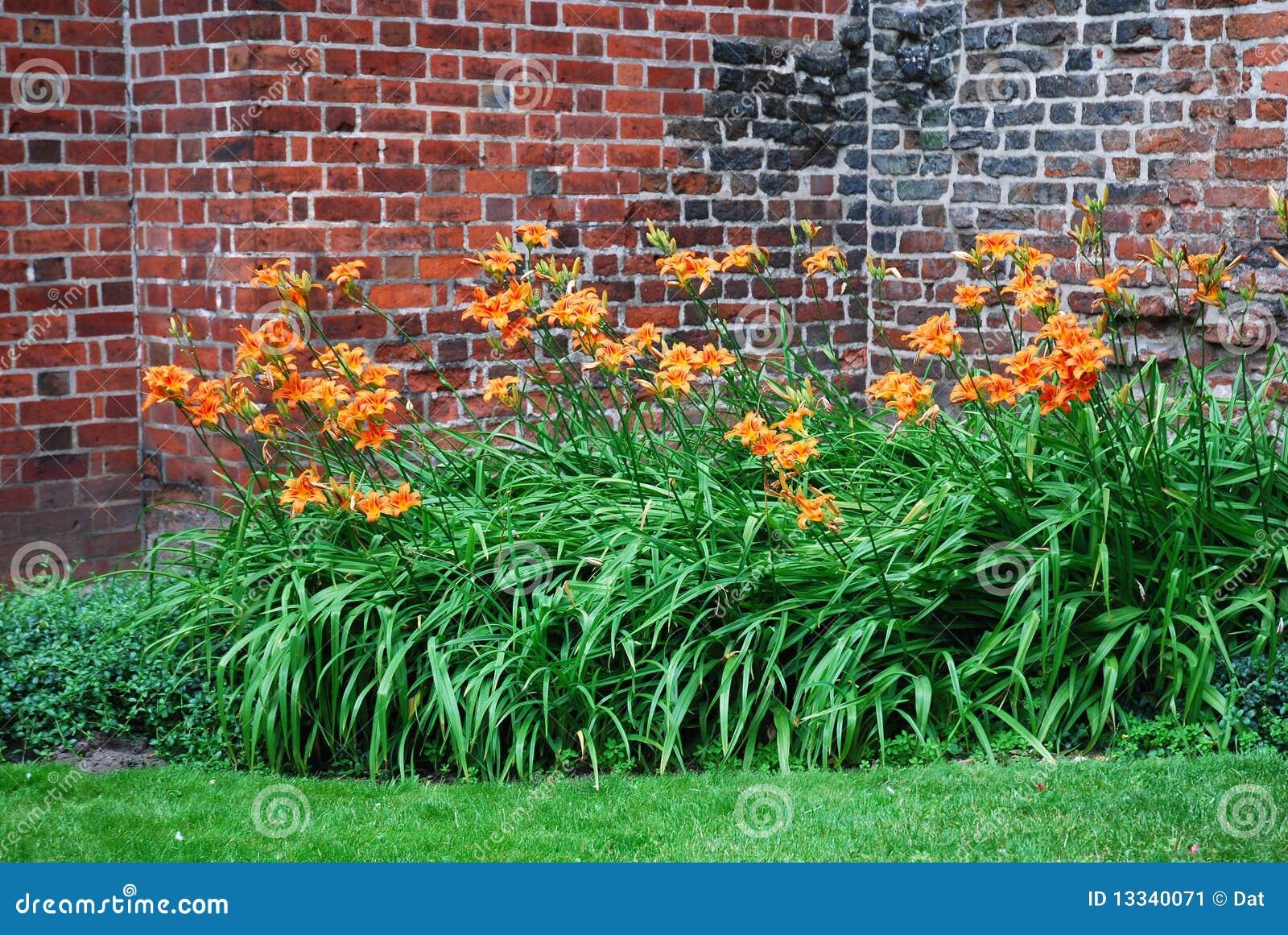 jardim fundo quintal : jardim fundo quintal:Uma vista do jardim do quintal com os lírios de dia alaranjados.