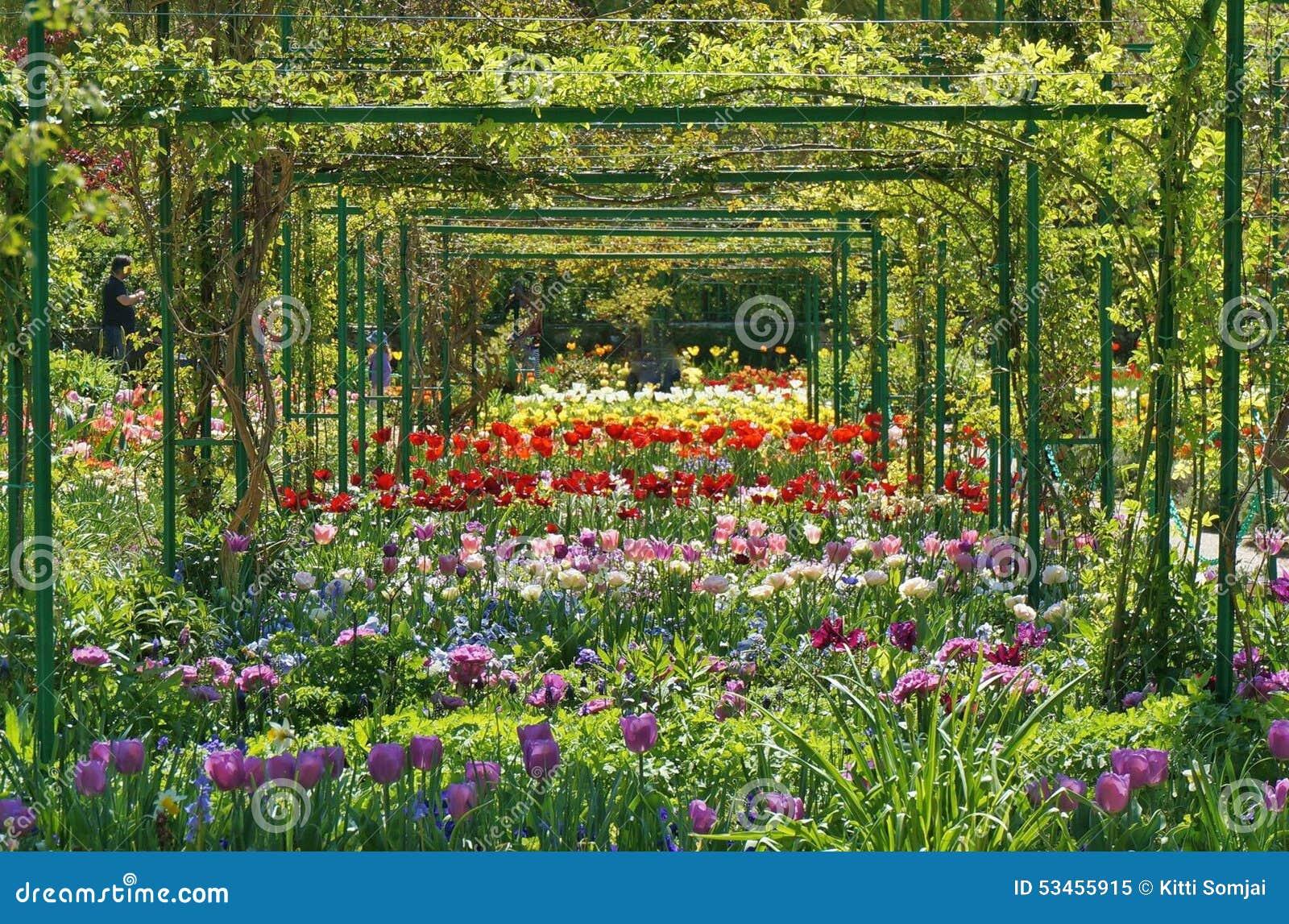 Um Jardim Do Quintal Com Crescimento De Flor, Paisagem No Verão Foto ~ Jardim De Quintal Fotos