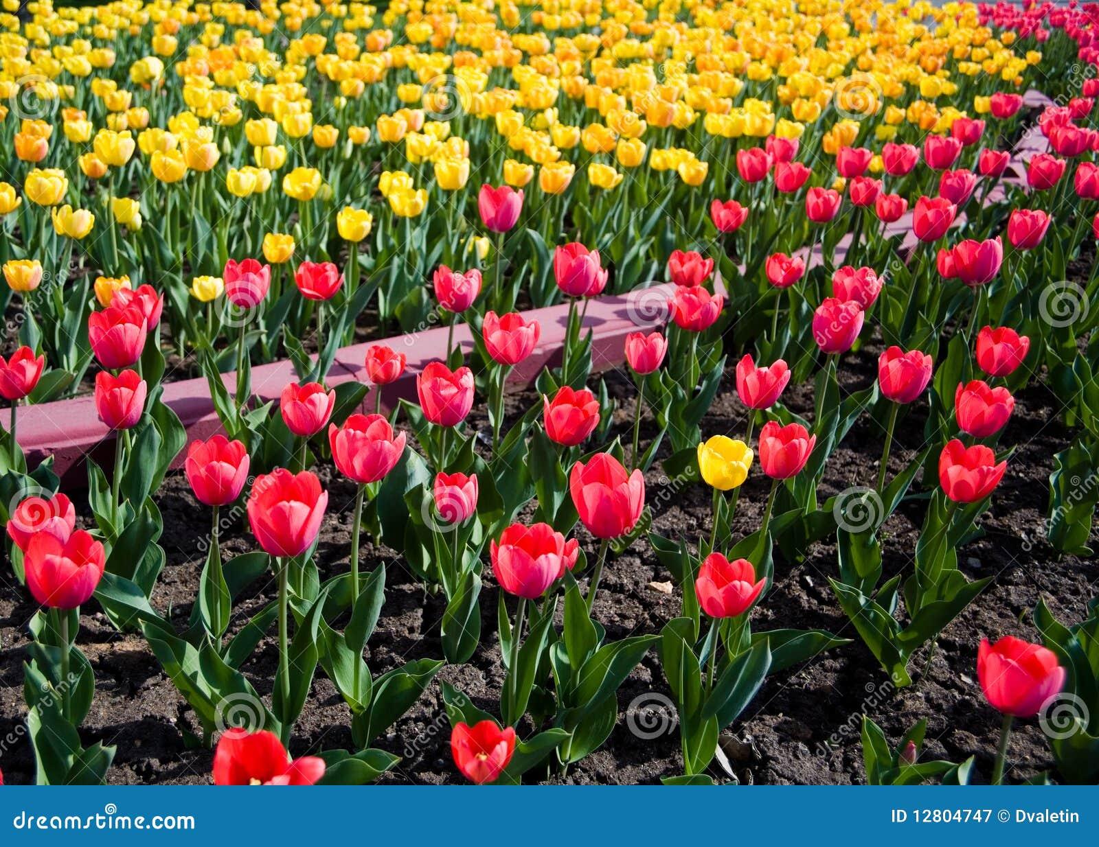 Jardim dos Tulips