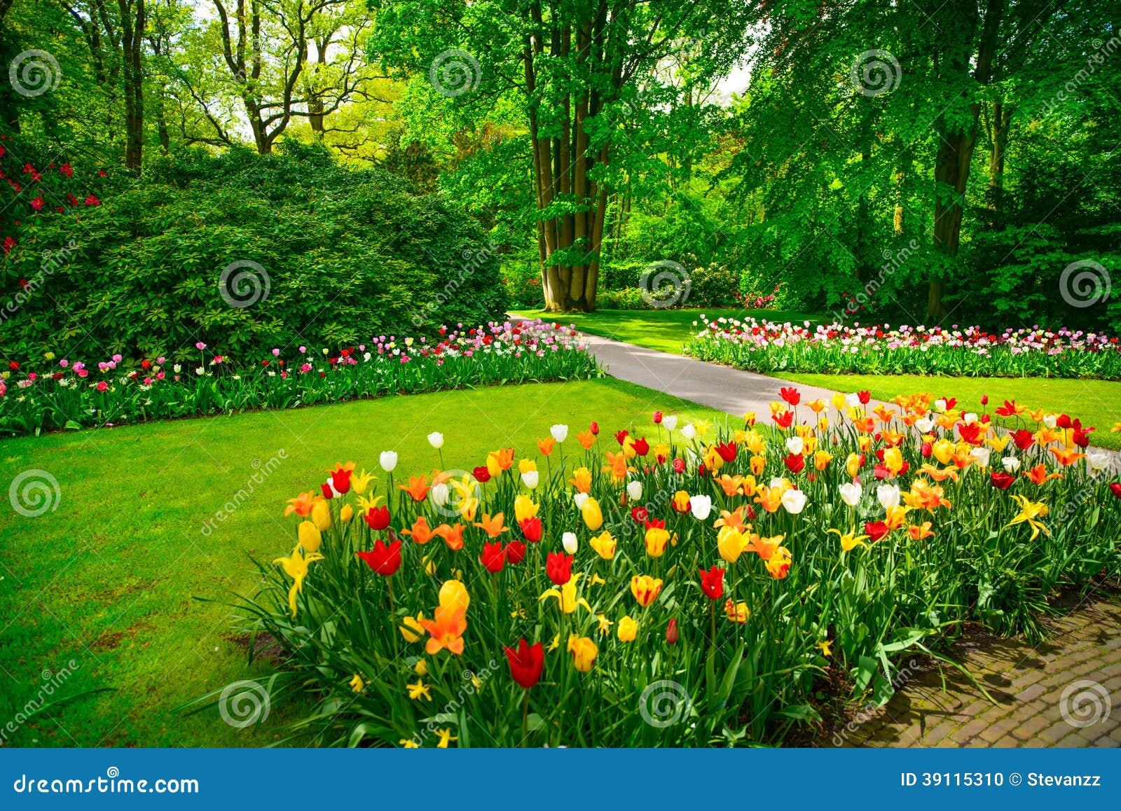 Jardine em Keukenhof, em flores da tulipa e em árvores no fundo na