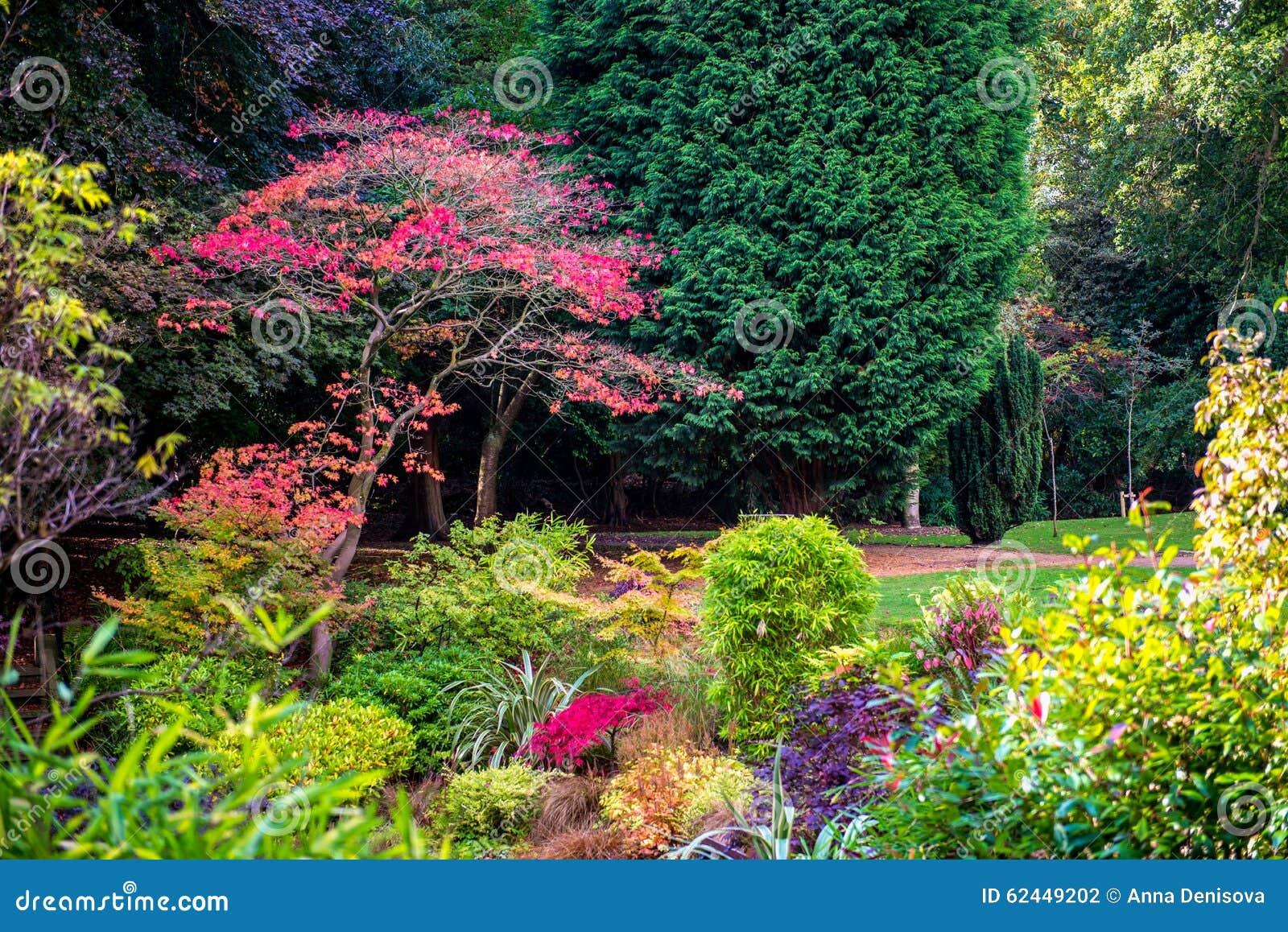 Jardim inglês bonito colorido durante o outono