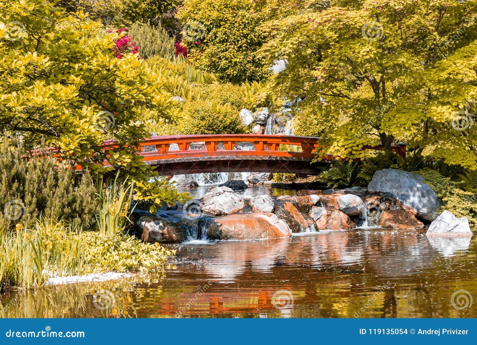 Jardim japonês com ponte de madeira e a cachoeira