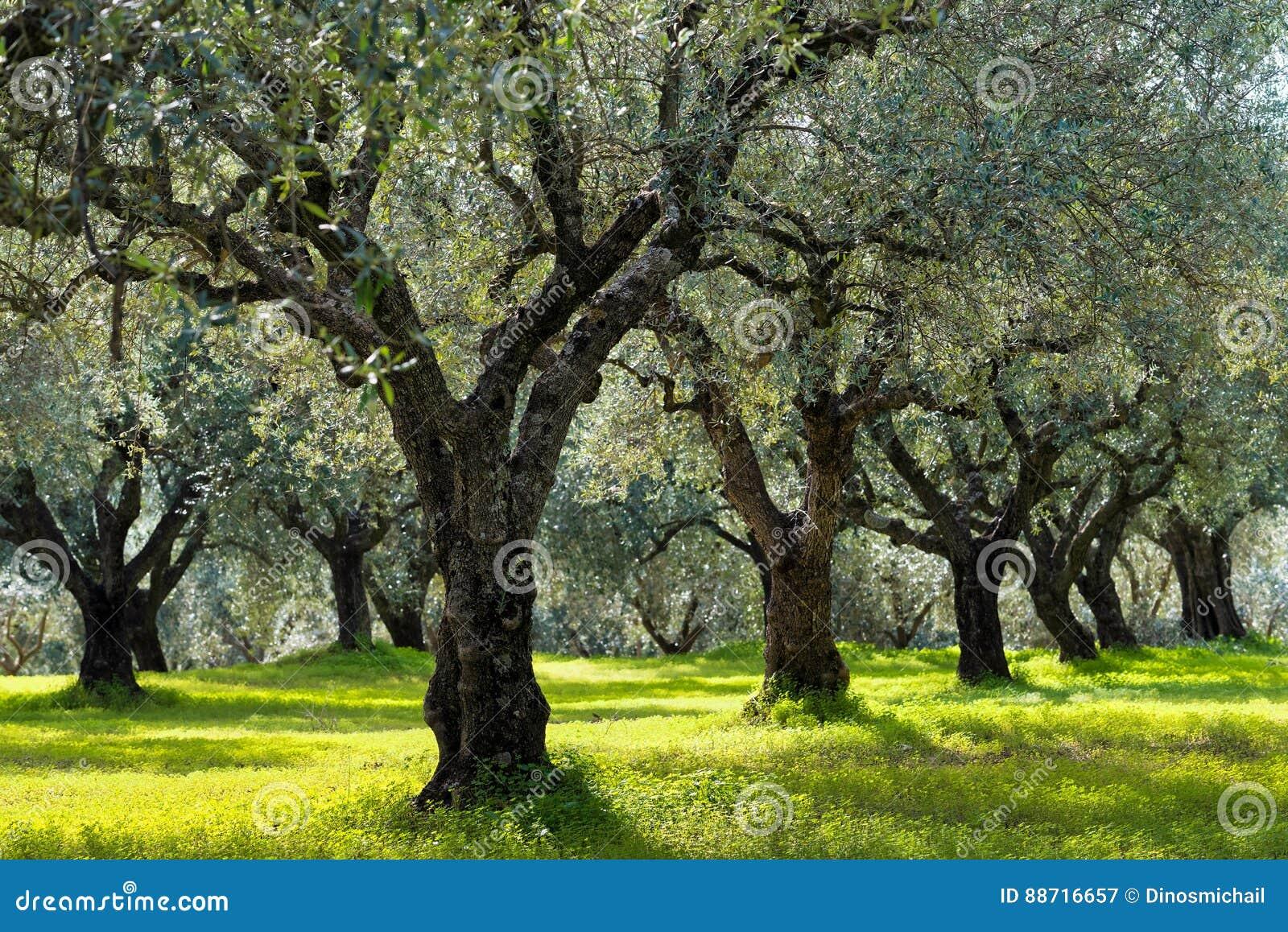 Jardim mediterrâneo, close up o ramo