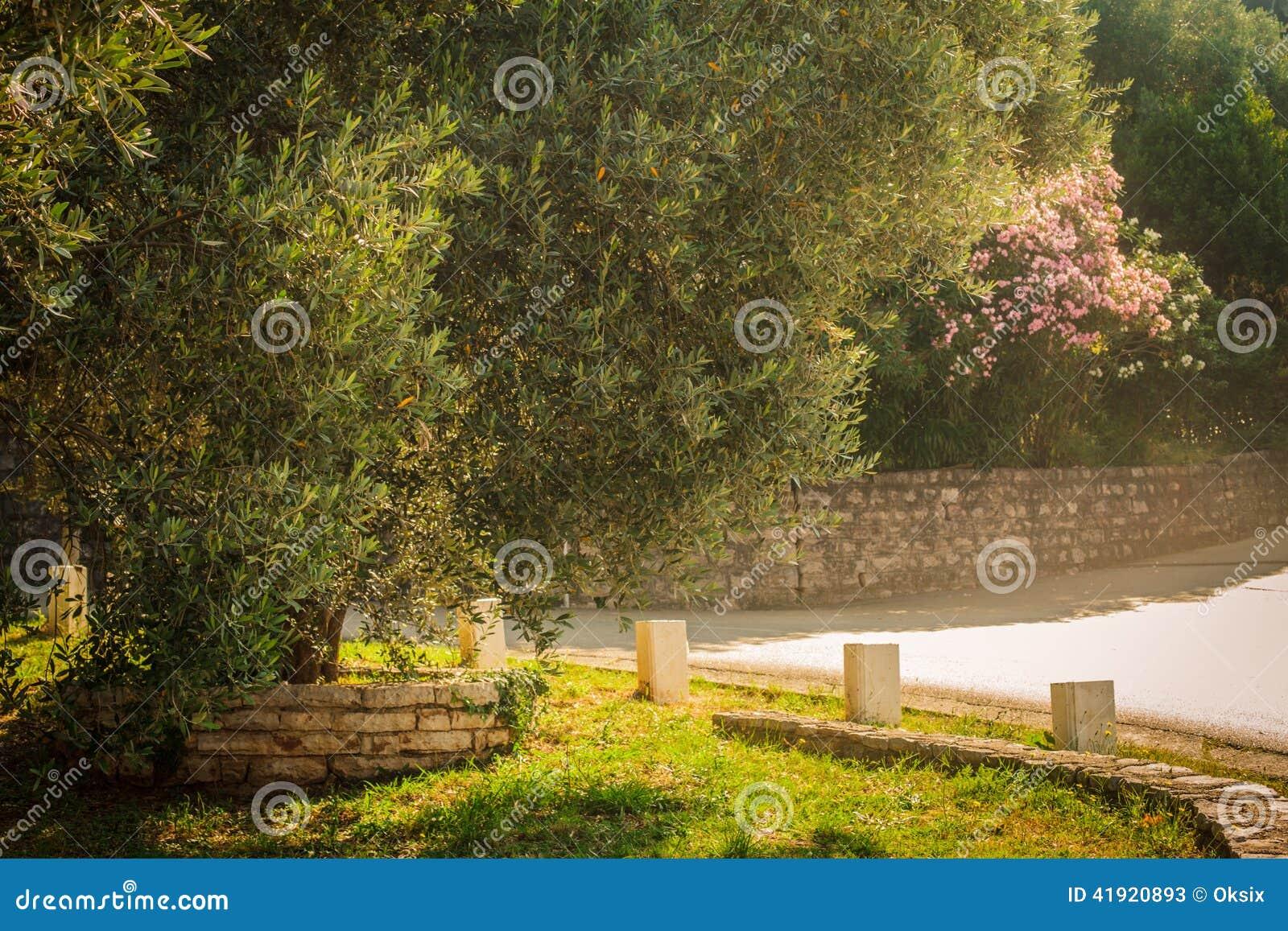Jardim mediterr?neo, close up o ramo