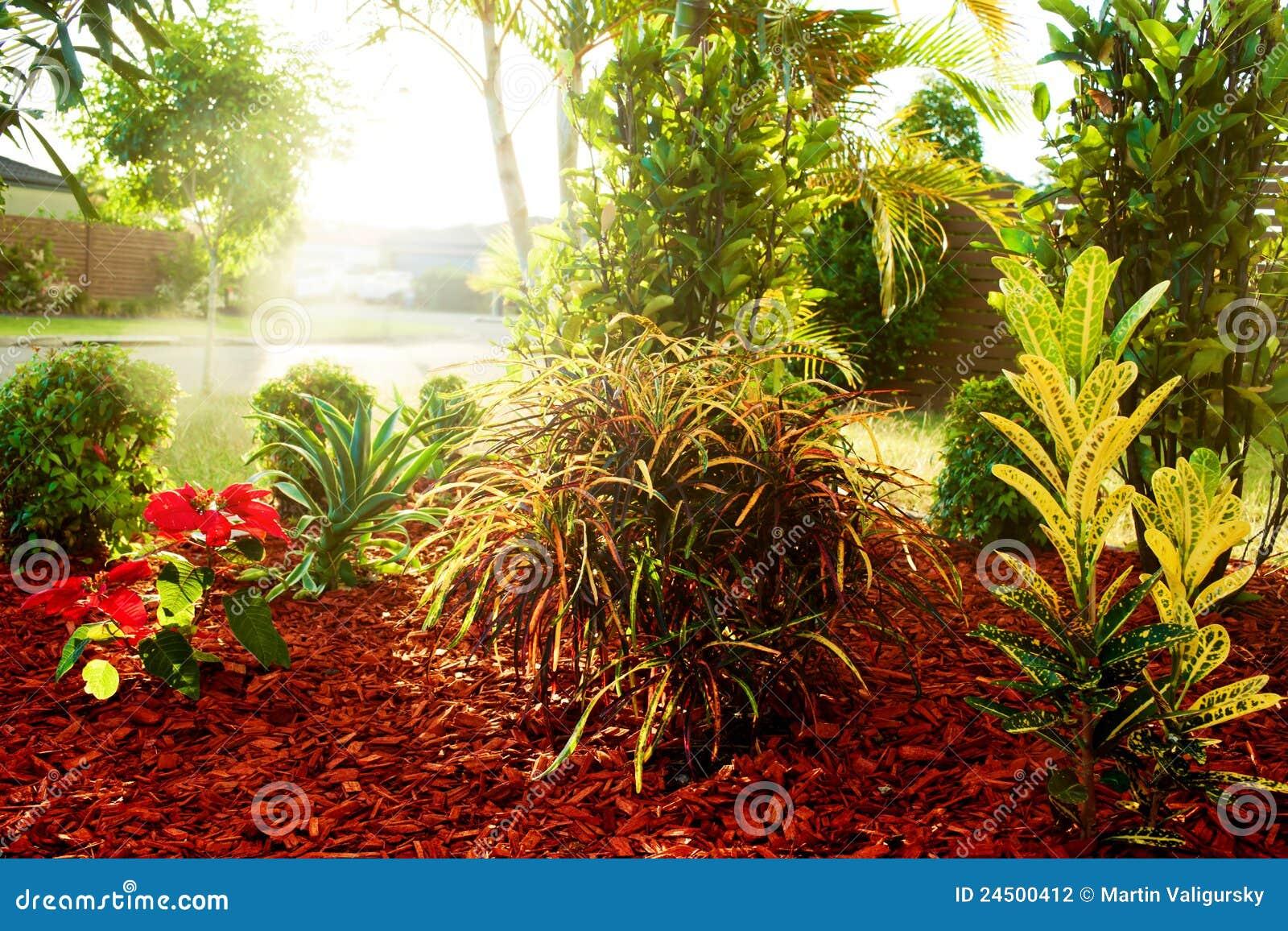 flores tropicais jardim : flores tropicais jardim:Colorful Tropical Garden Plants