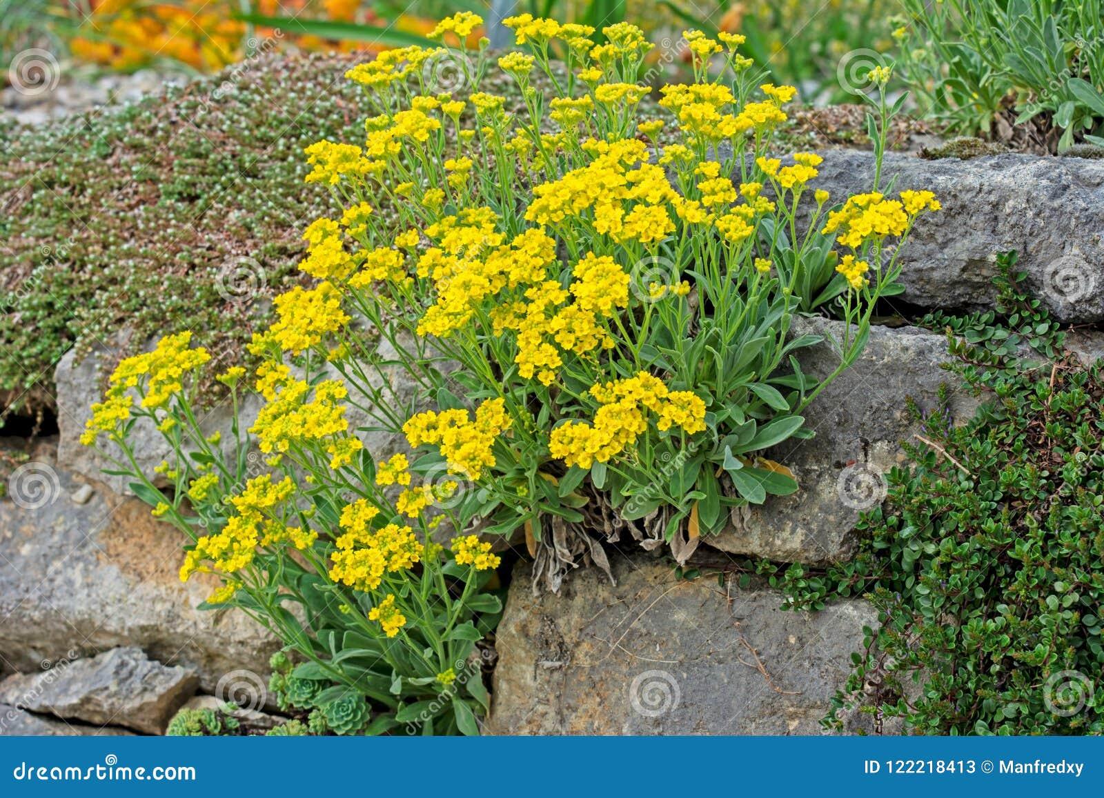 Jardim ornamental com flores amarelas